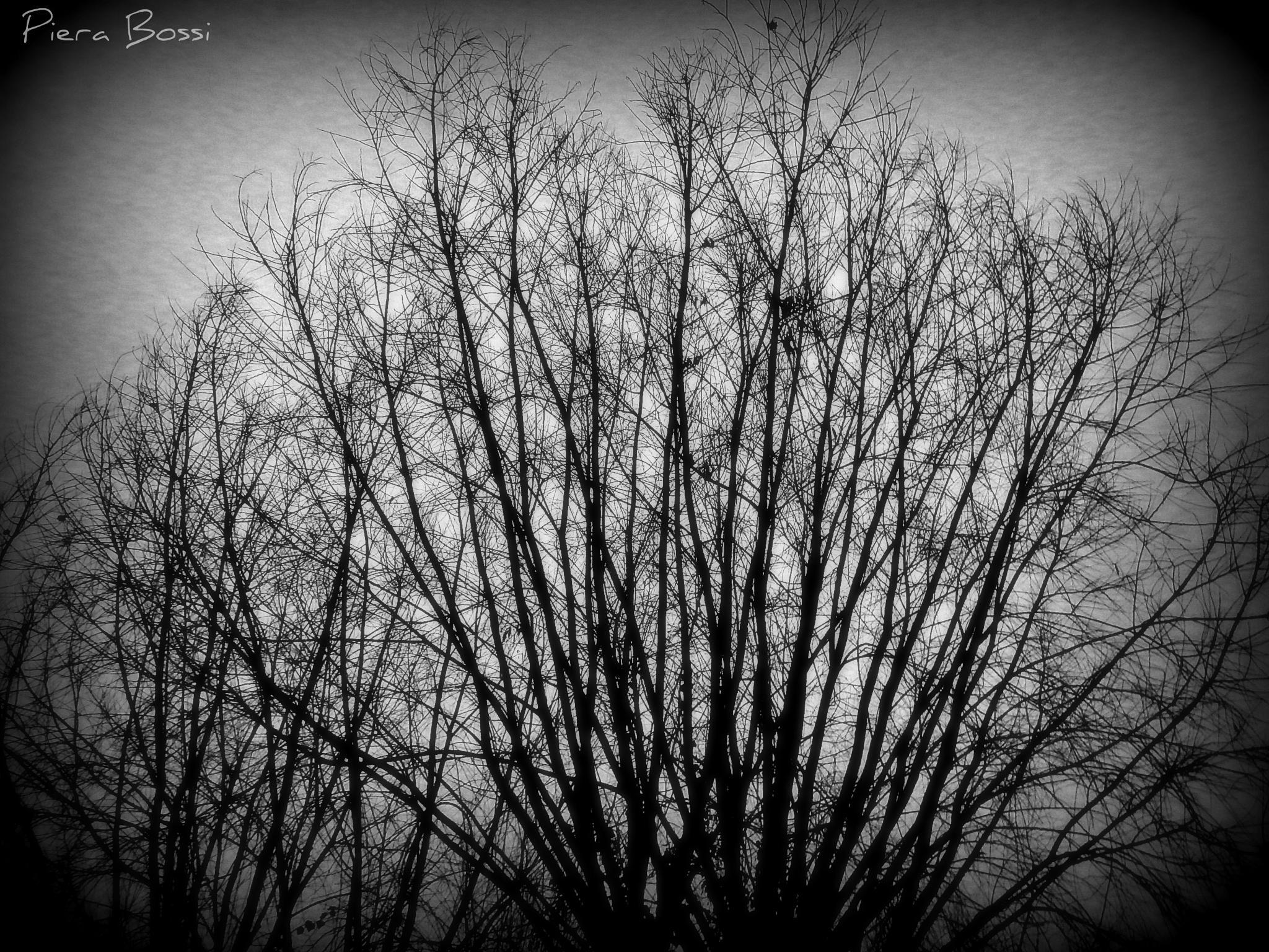 Rami nel buio by Piera Bossi