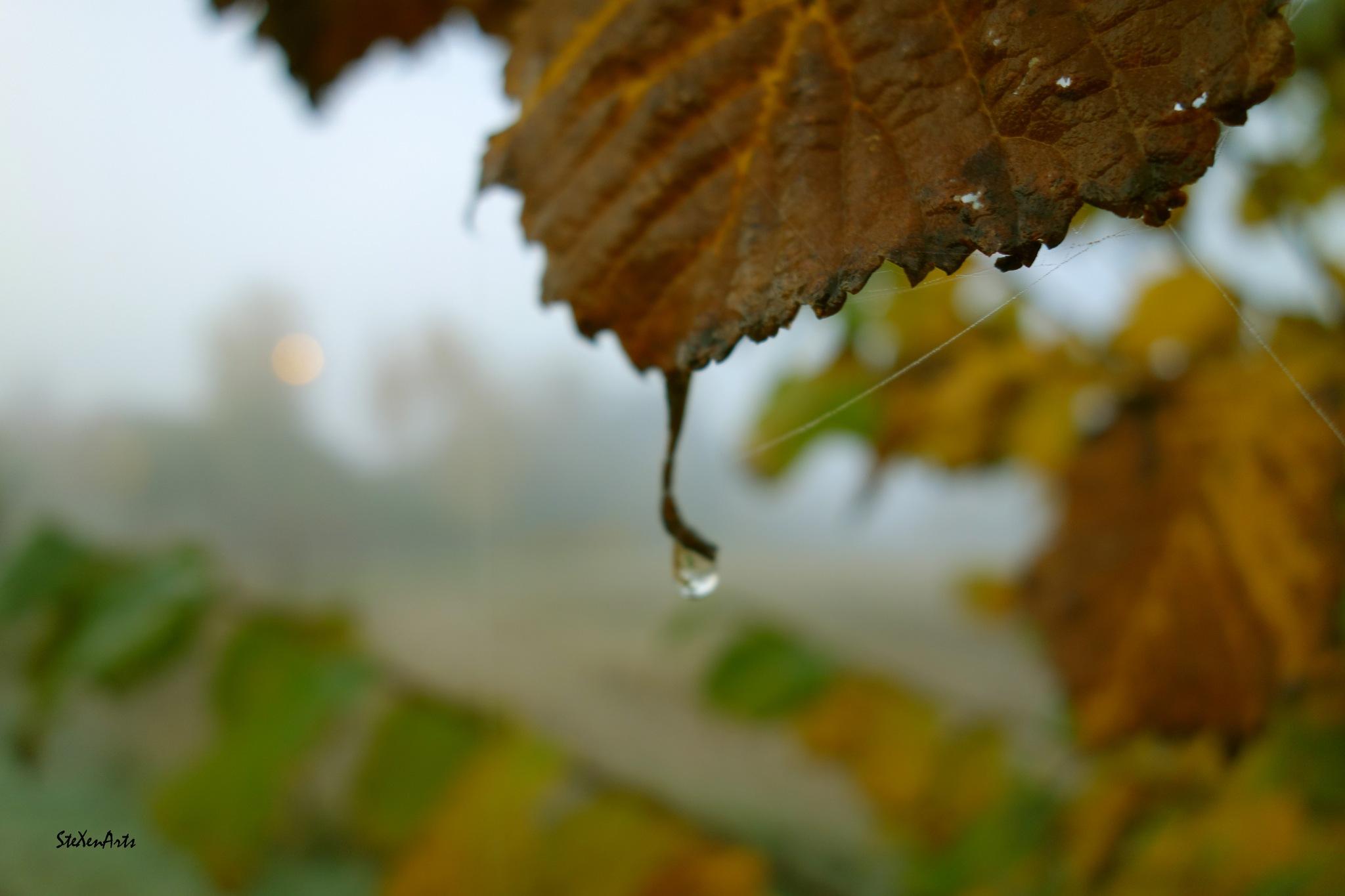 droplet by Sanna