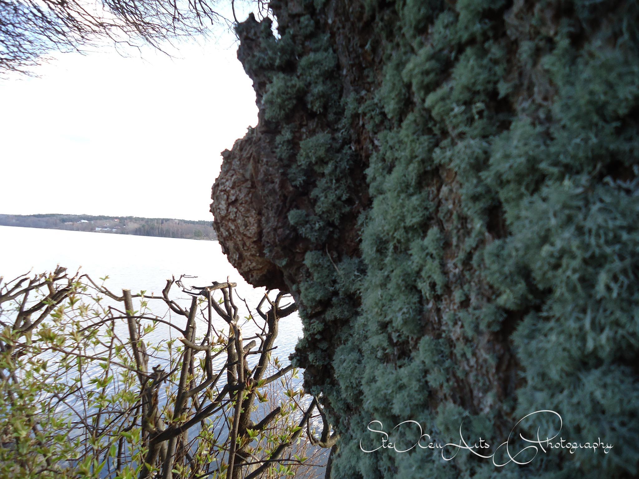 mossy by Sanna & Stefan