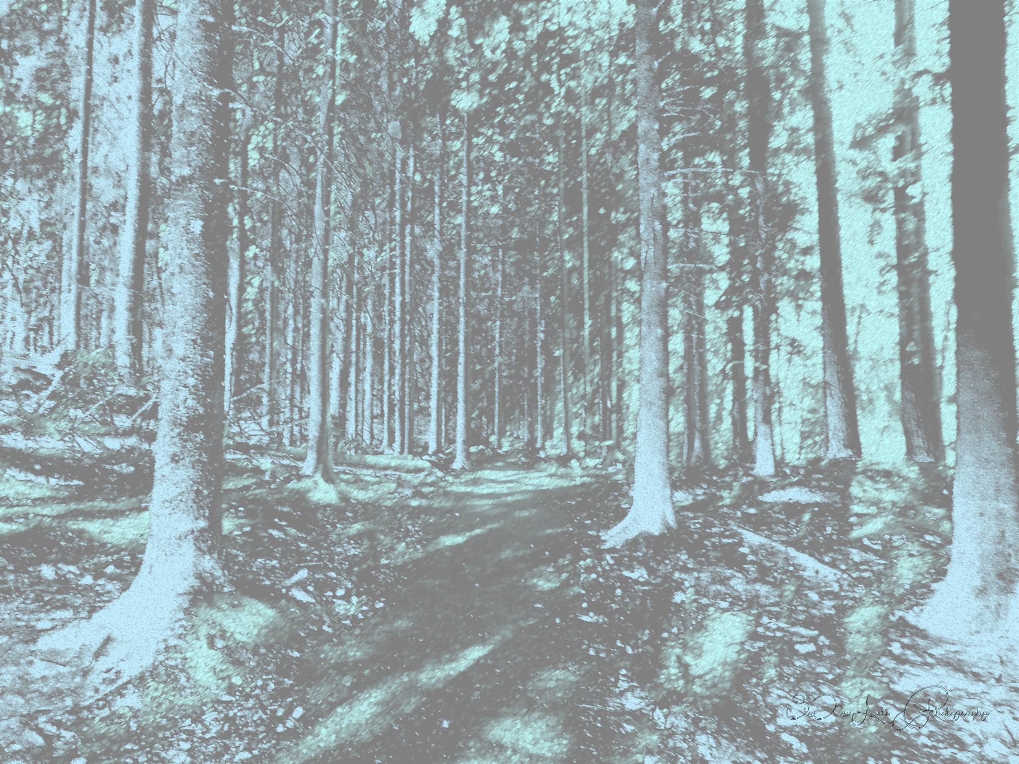 woods by Sanna