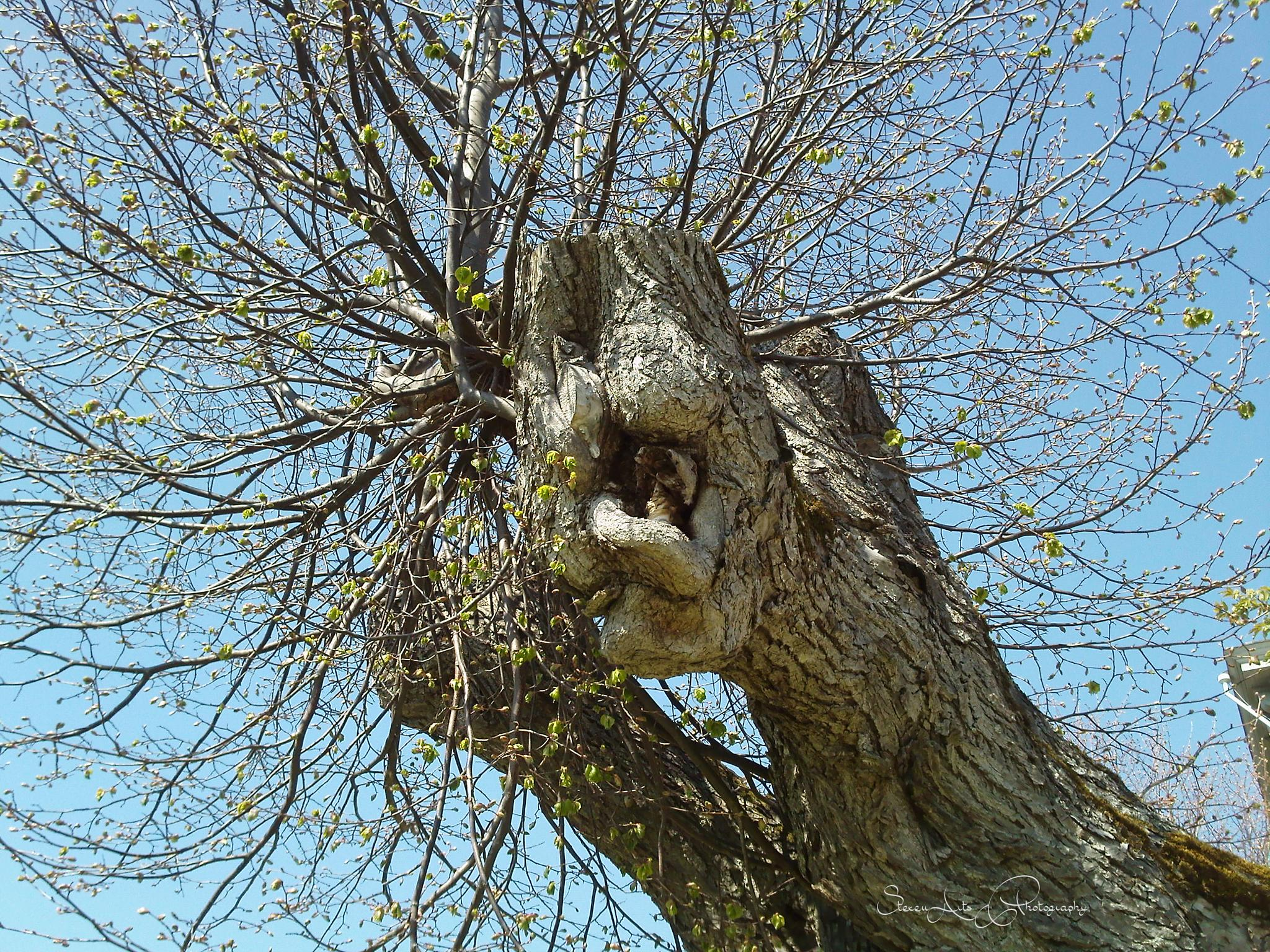 the dragon tree by Sanna