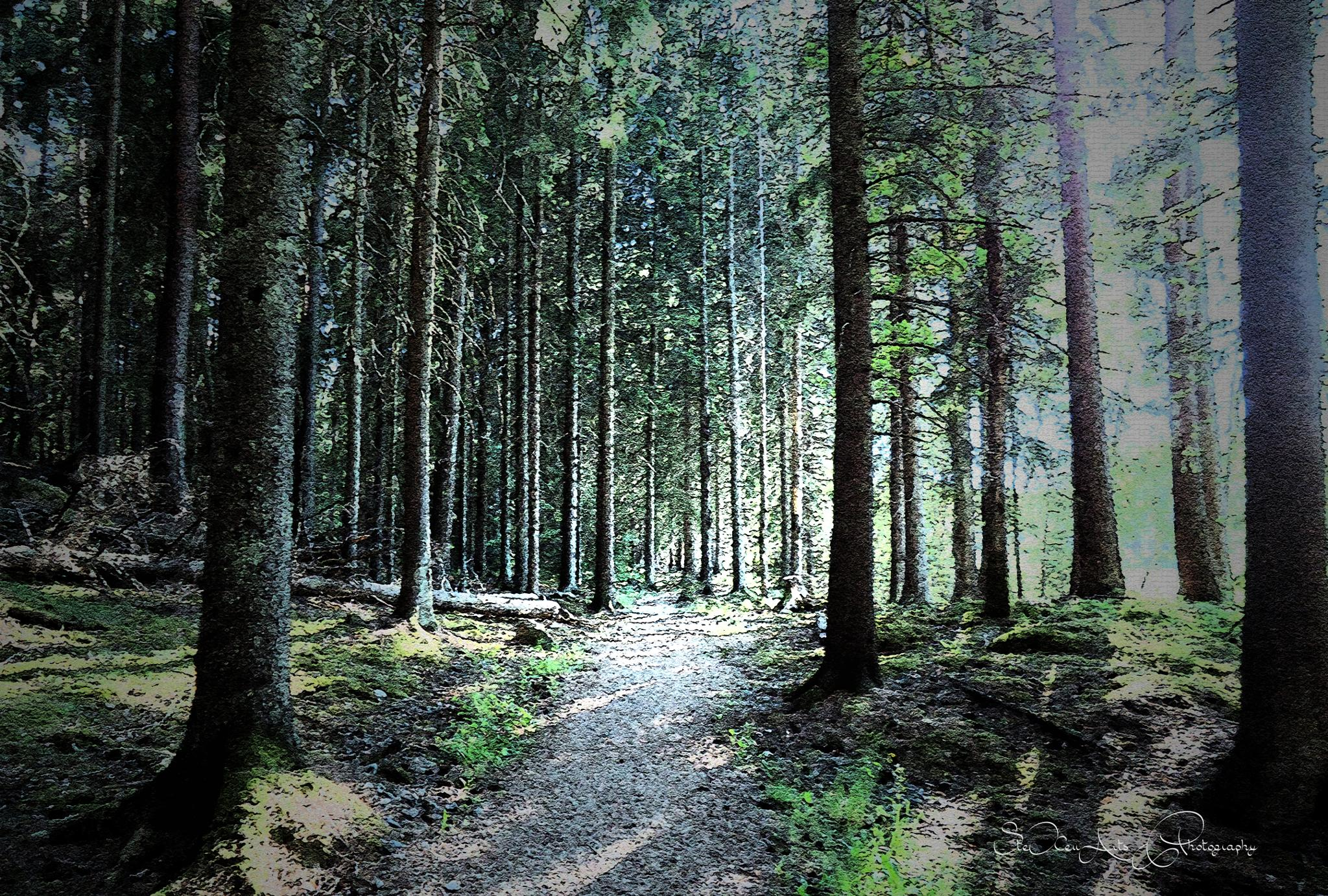 woods-2 by Sanna
