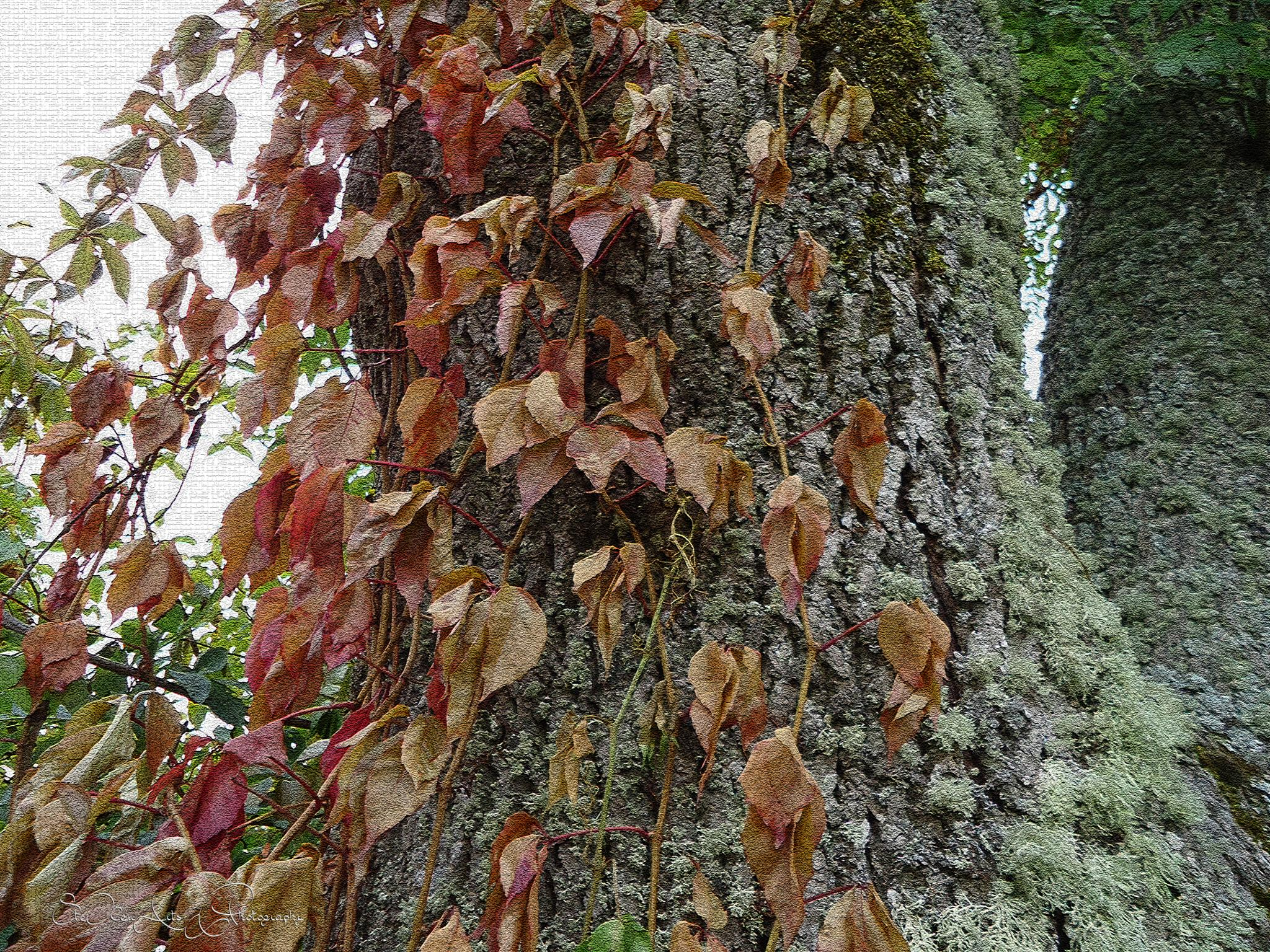climbing leaves by Sanna