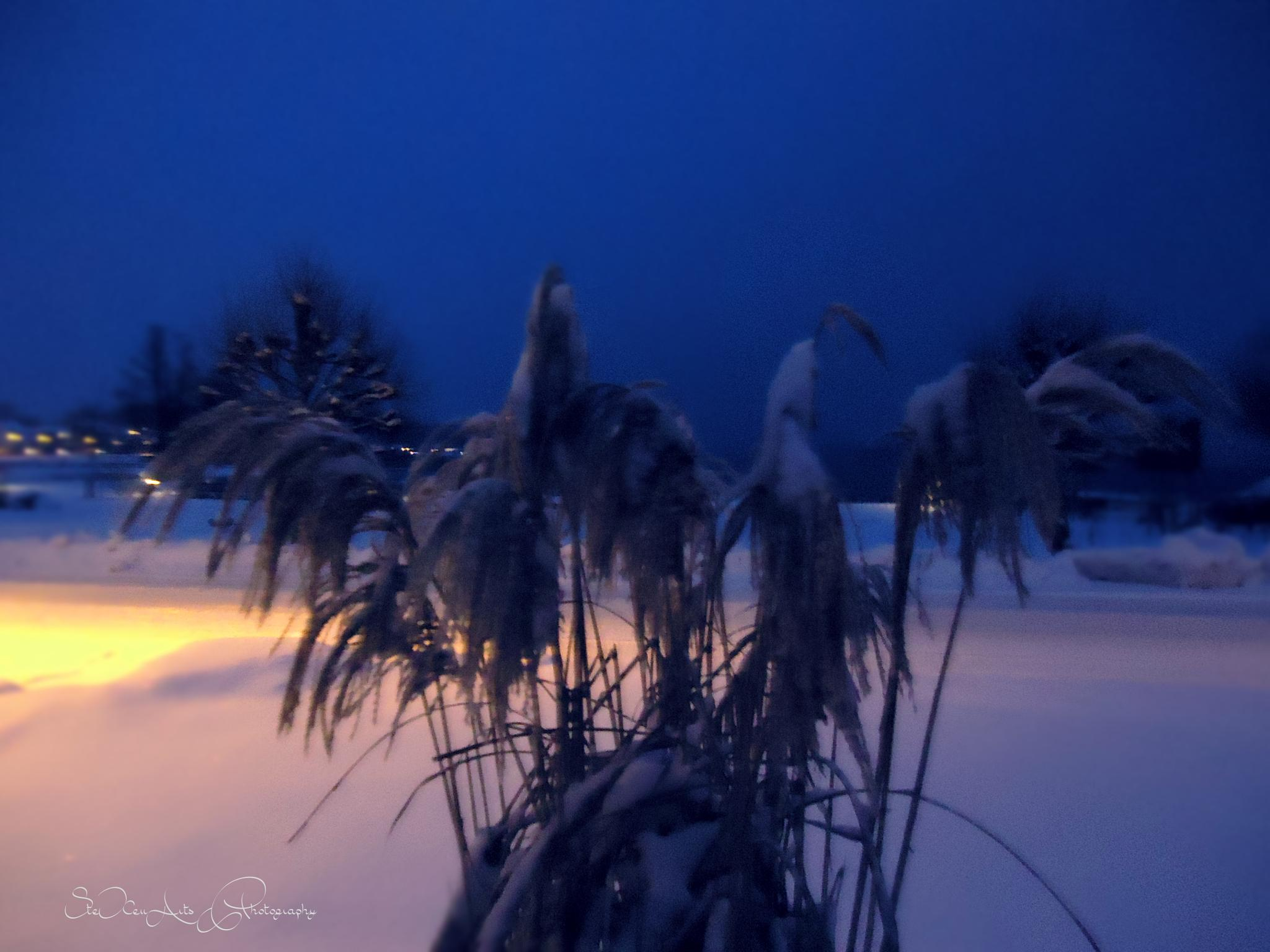 blue night by SteXenArts Photography