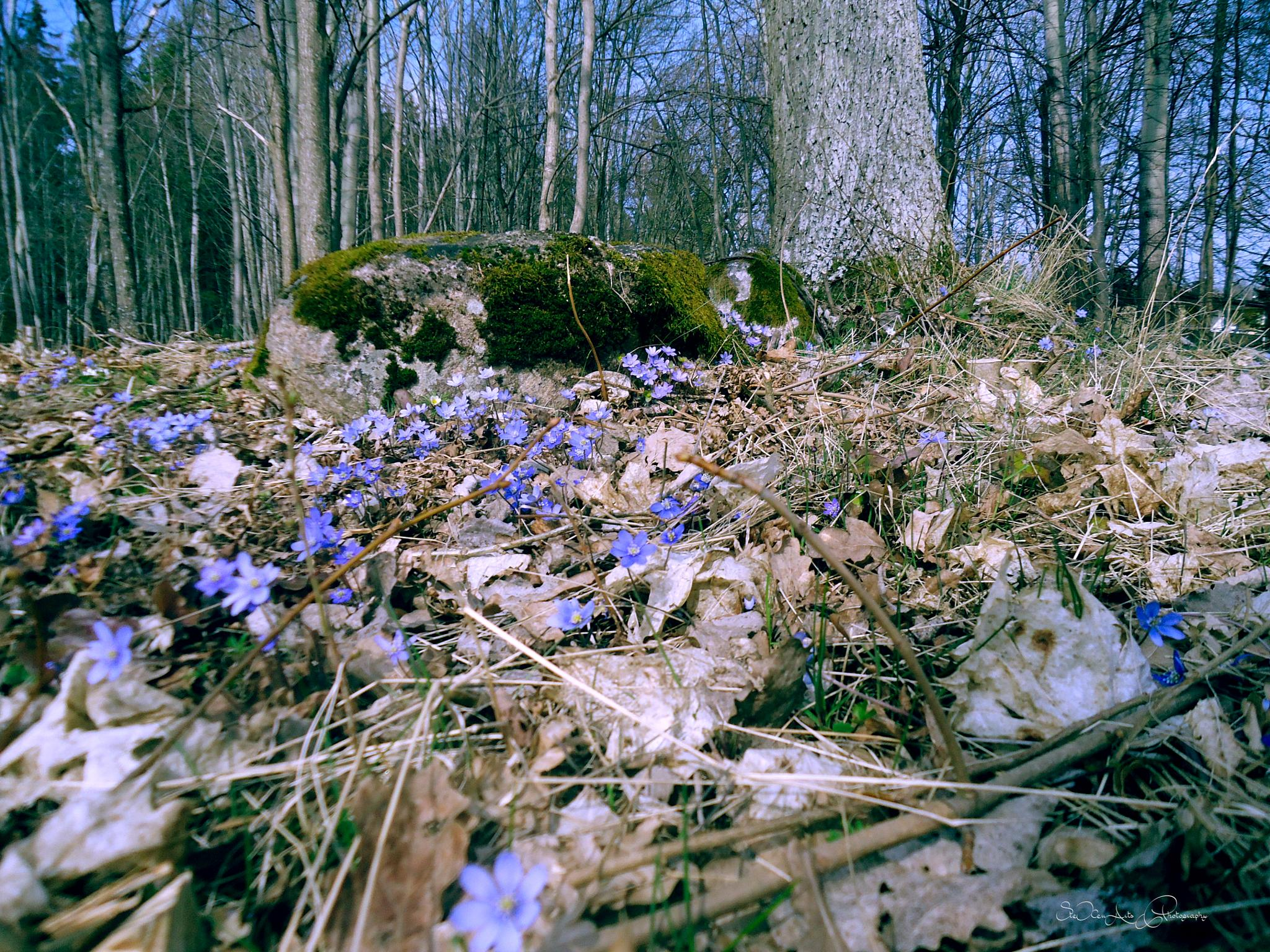 spring by Sanna