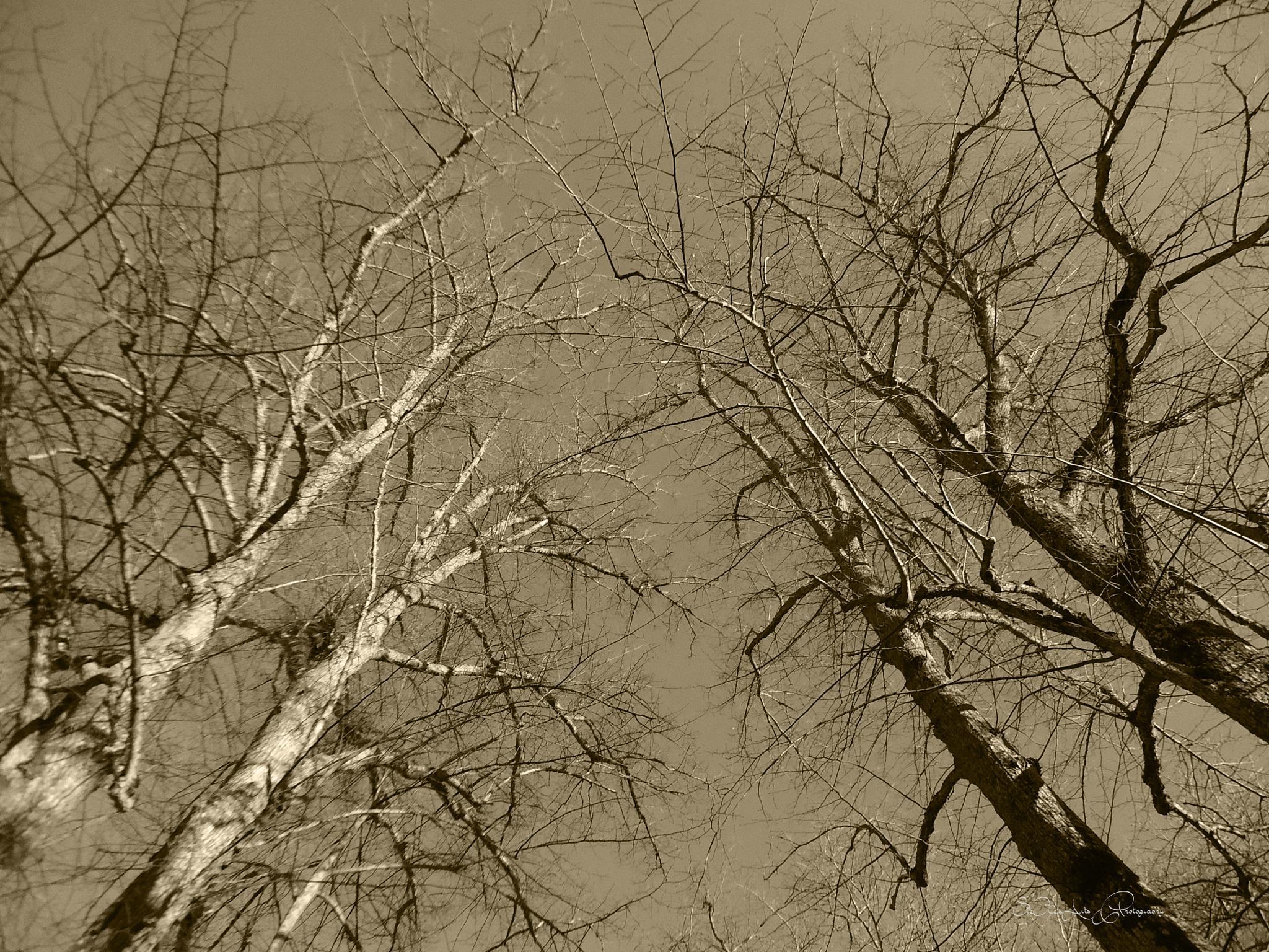 trees by Sanna & Stefan