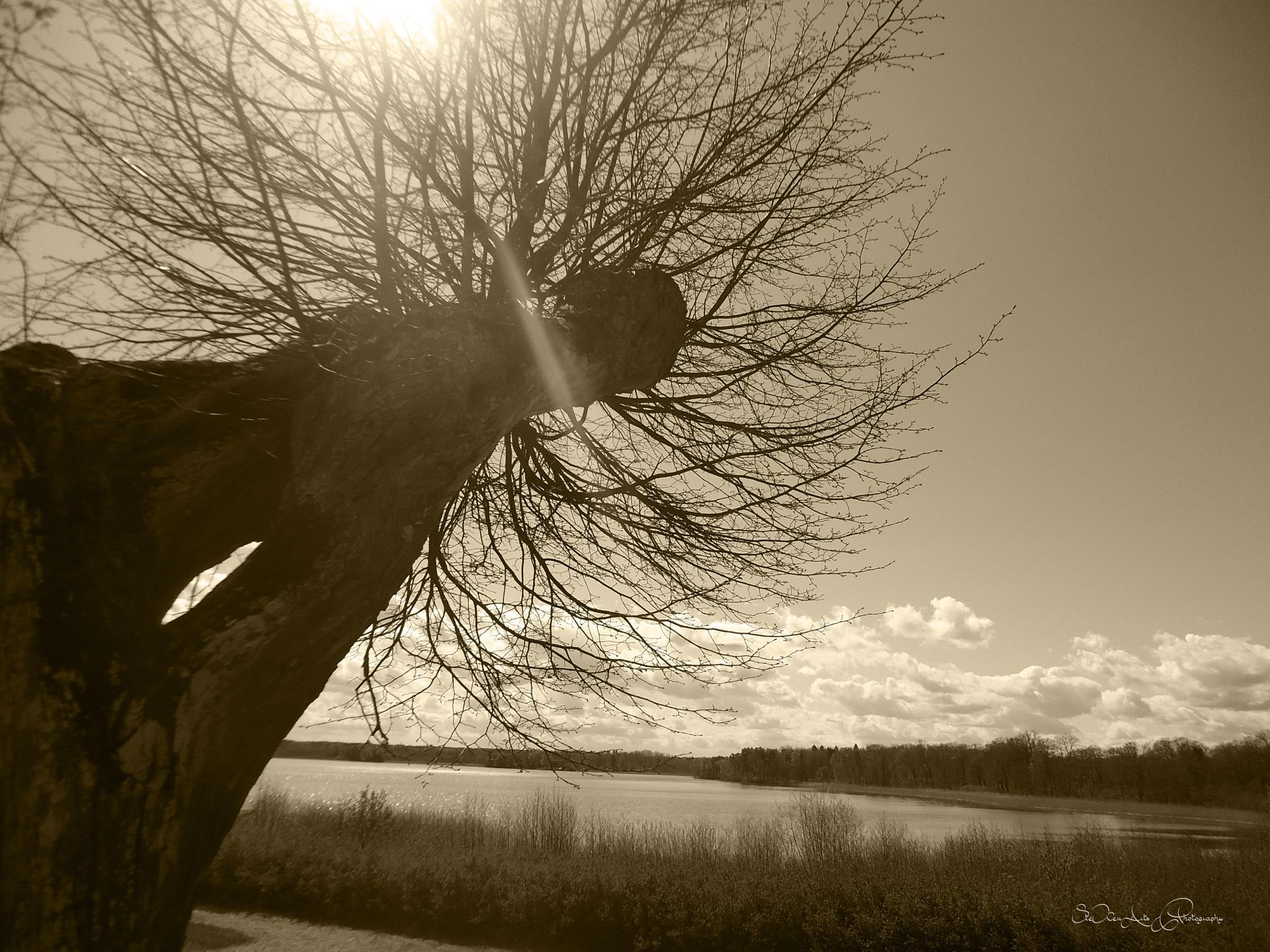 lake by Sanna