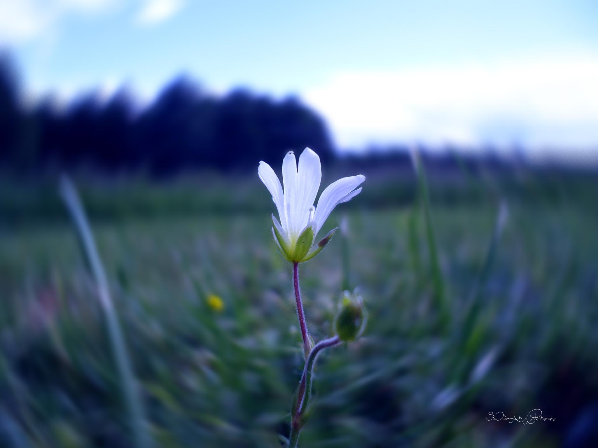 meadow by Sanna