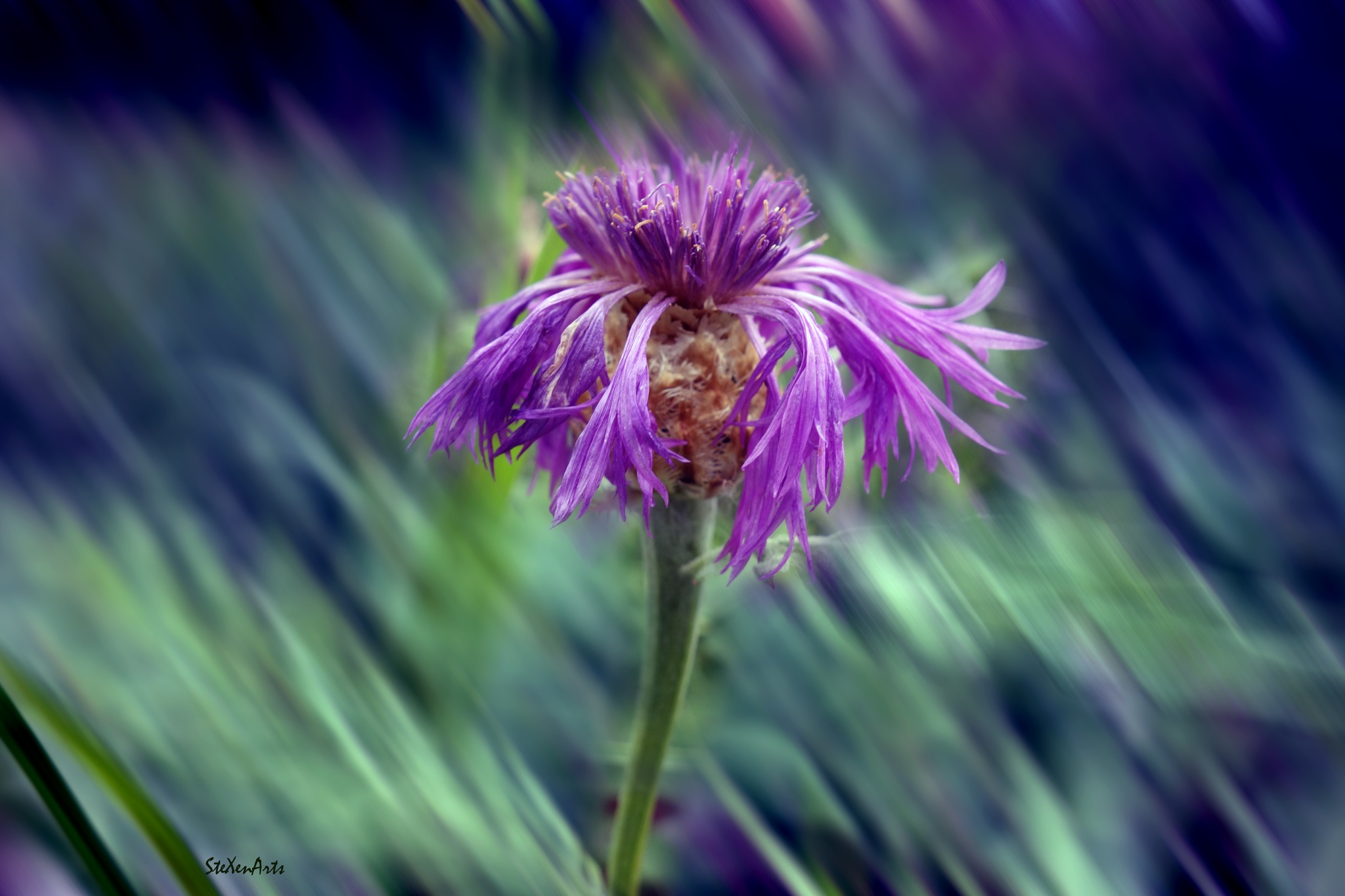 in purple by Sanna