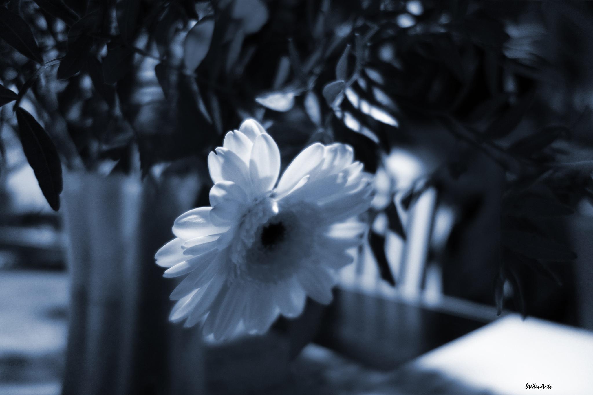 bouquet - take 2 by Sanna