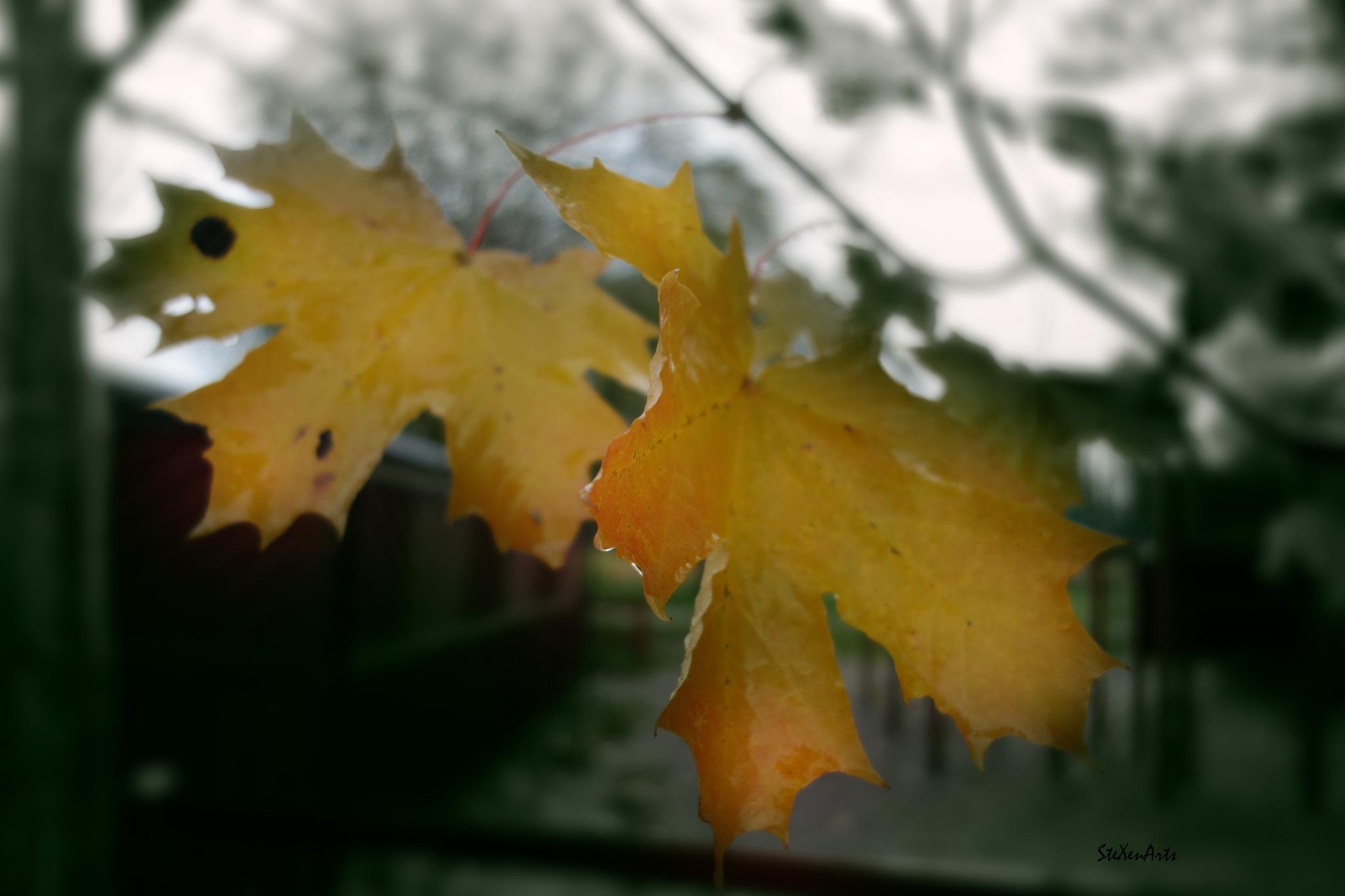 flutter by Sanna