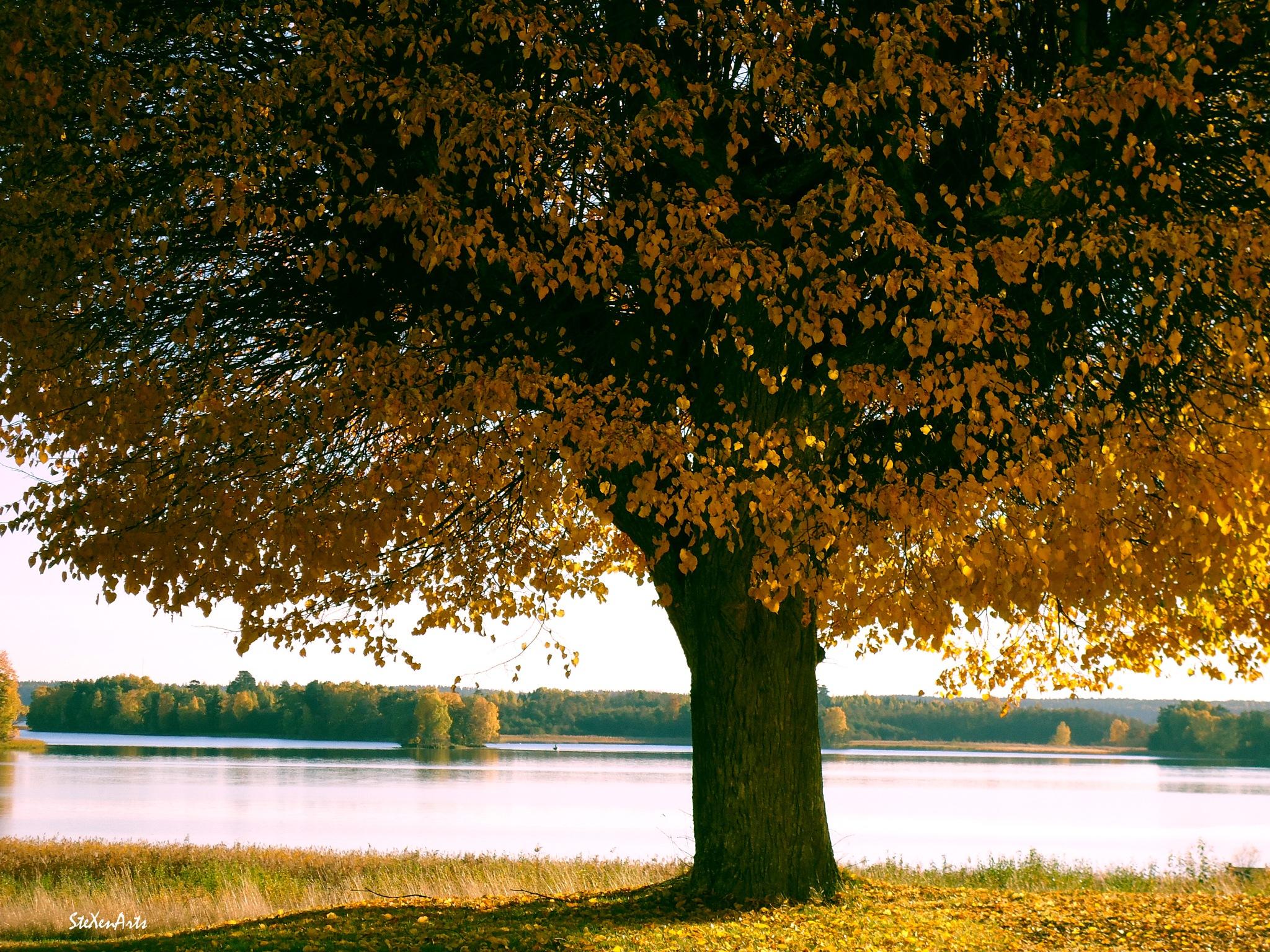 autumn lake by Sanna