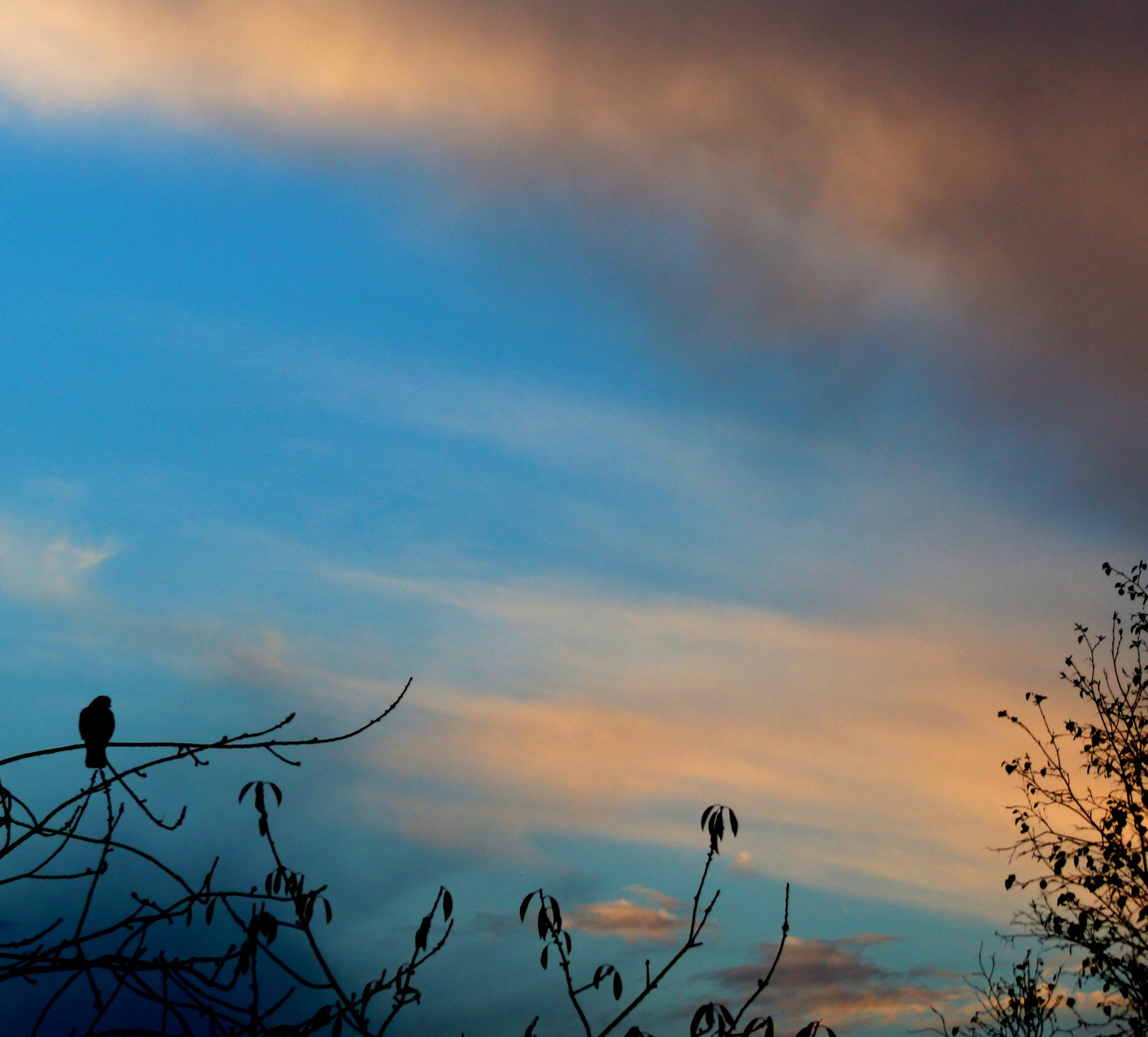 Crow at Dawn by Jon Franks