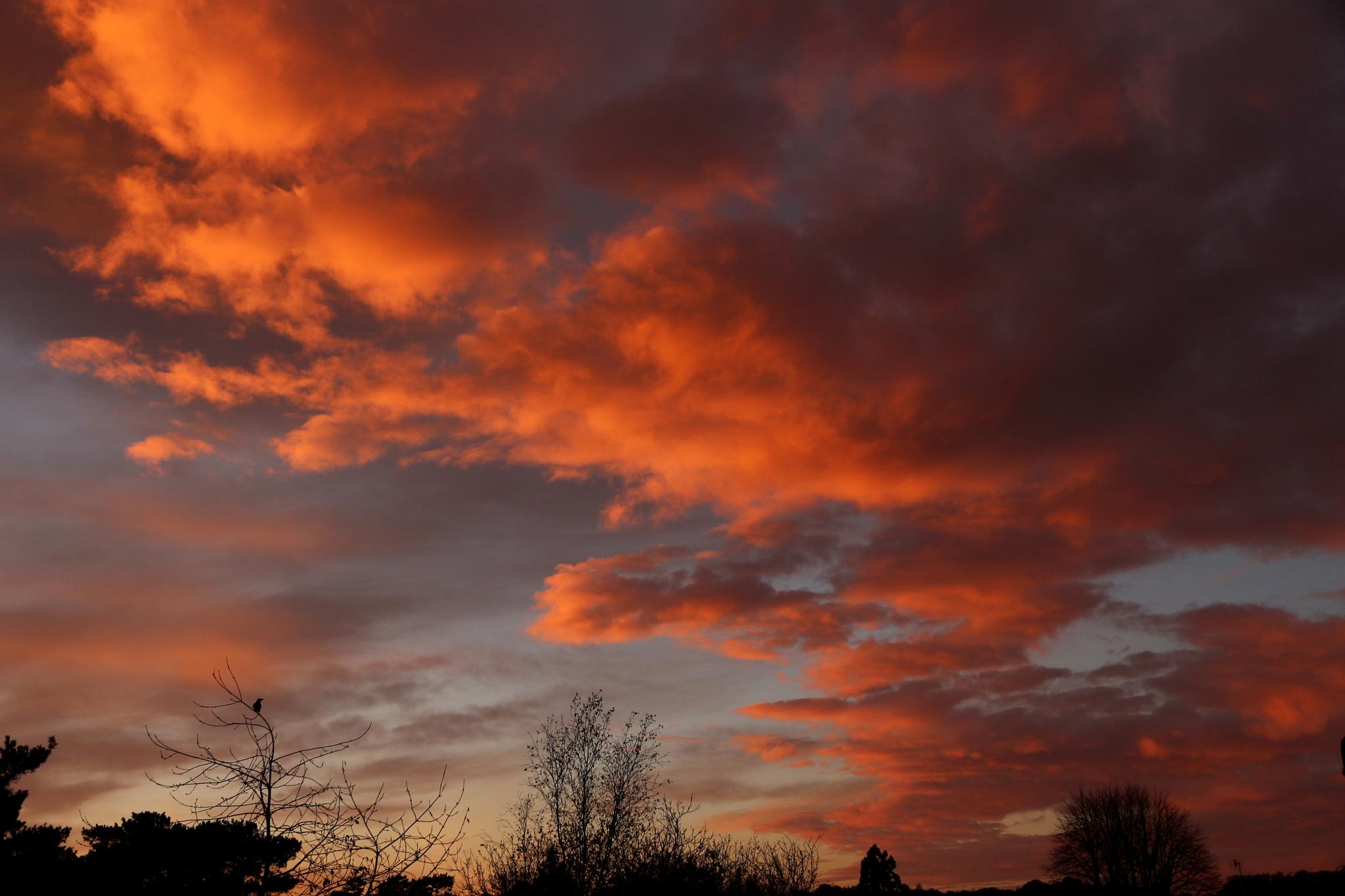 Crow at Dawn 2 by Jon Franks
