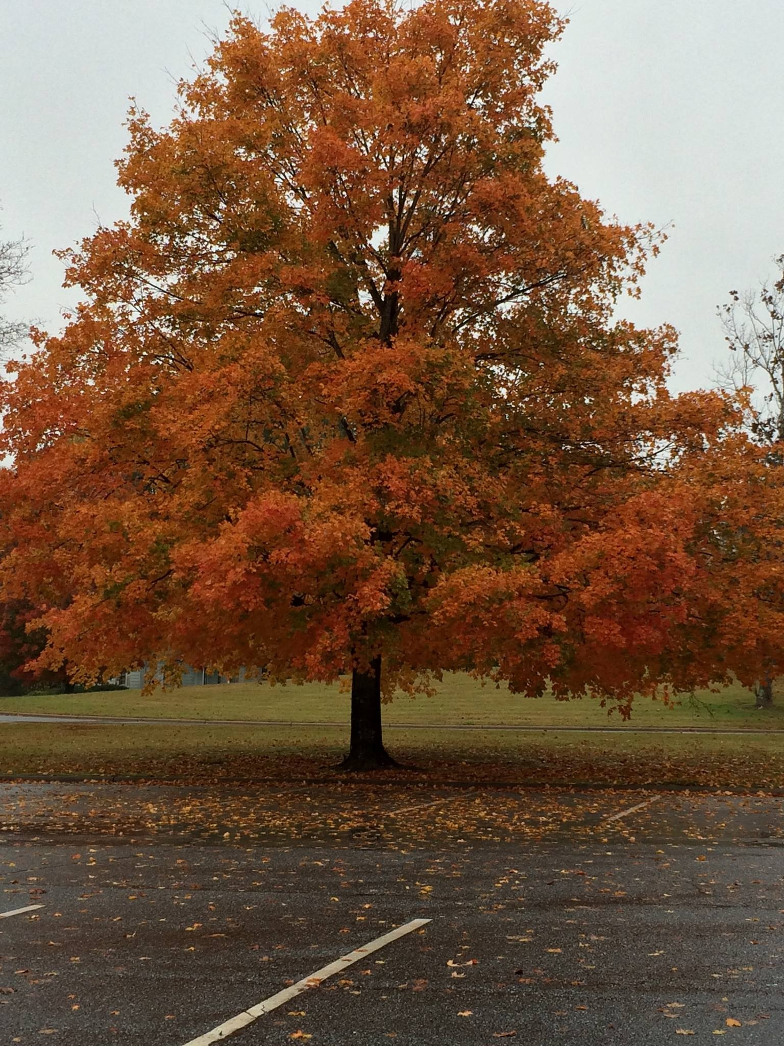 Fall Fever by Stephanie Taylor