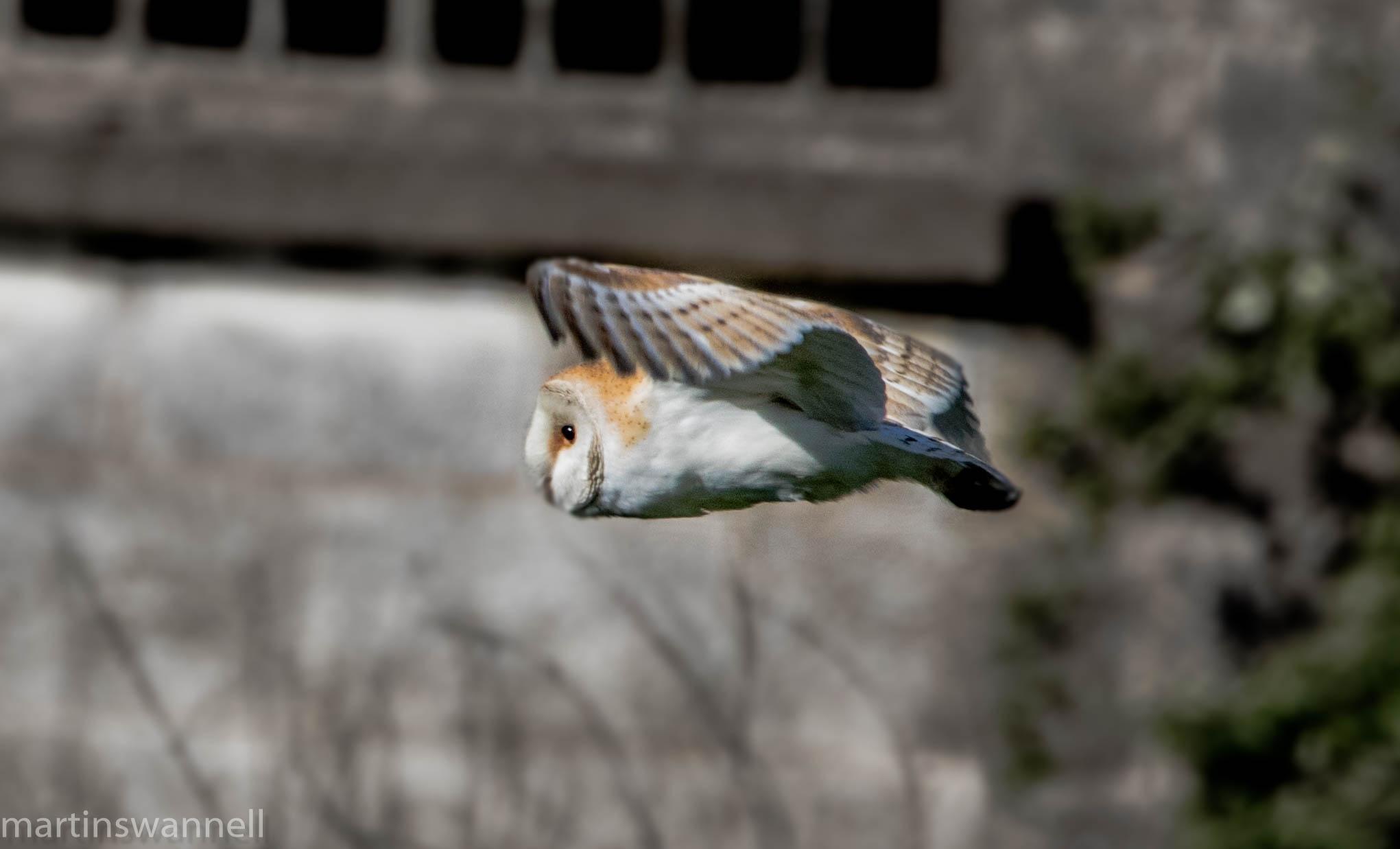 Photo in Nature #owls #nature #birds #birding #raptors