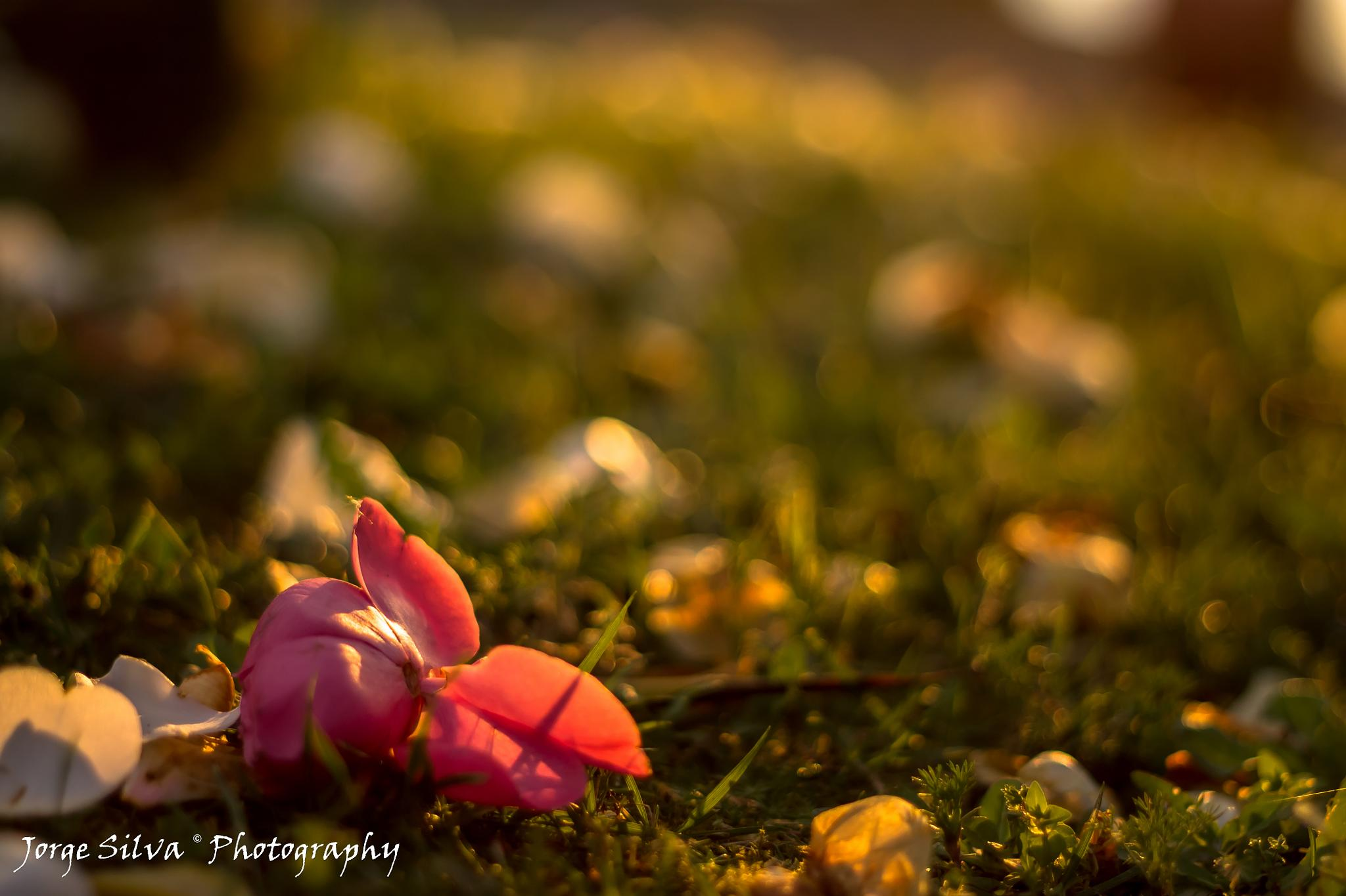 Pink by JORGEpht