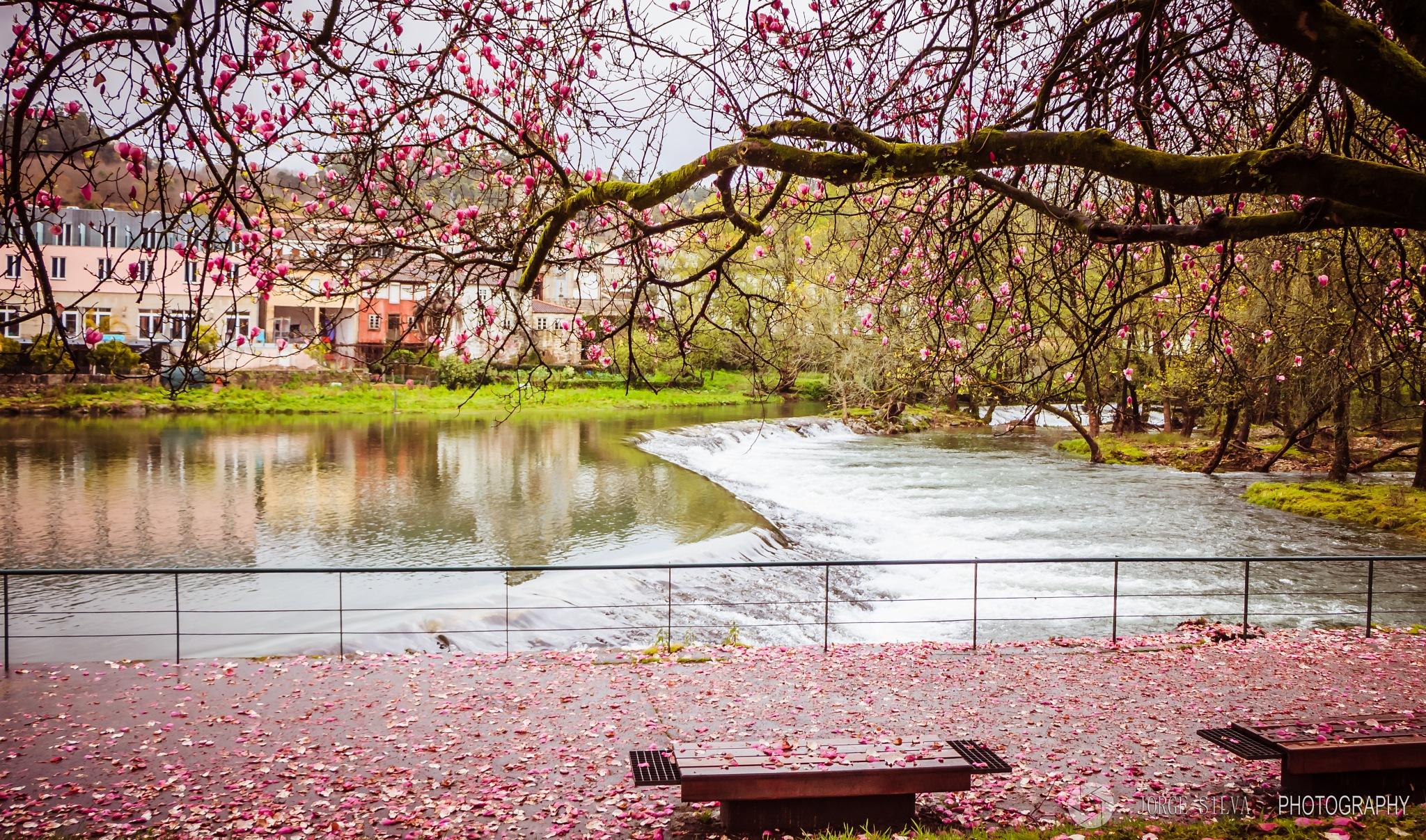 spring by JORGEpht