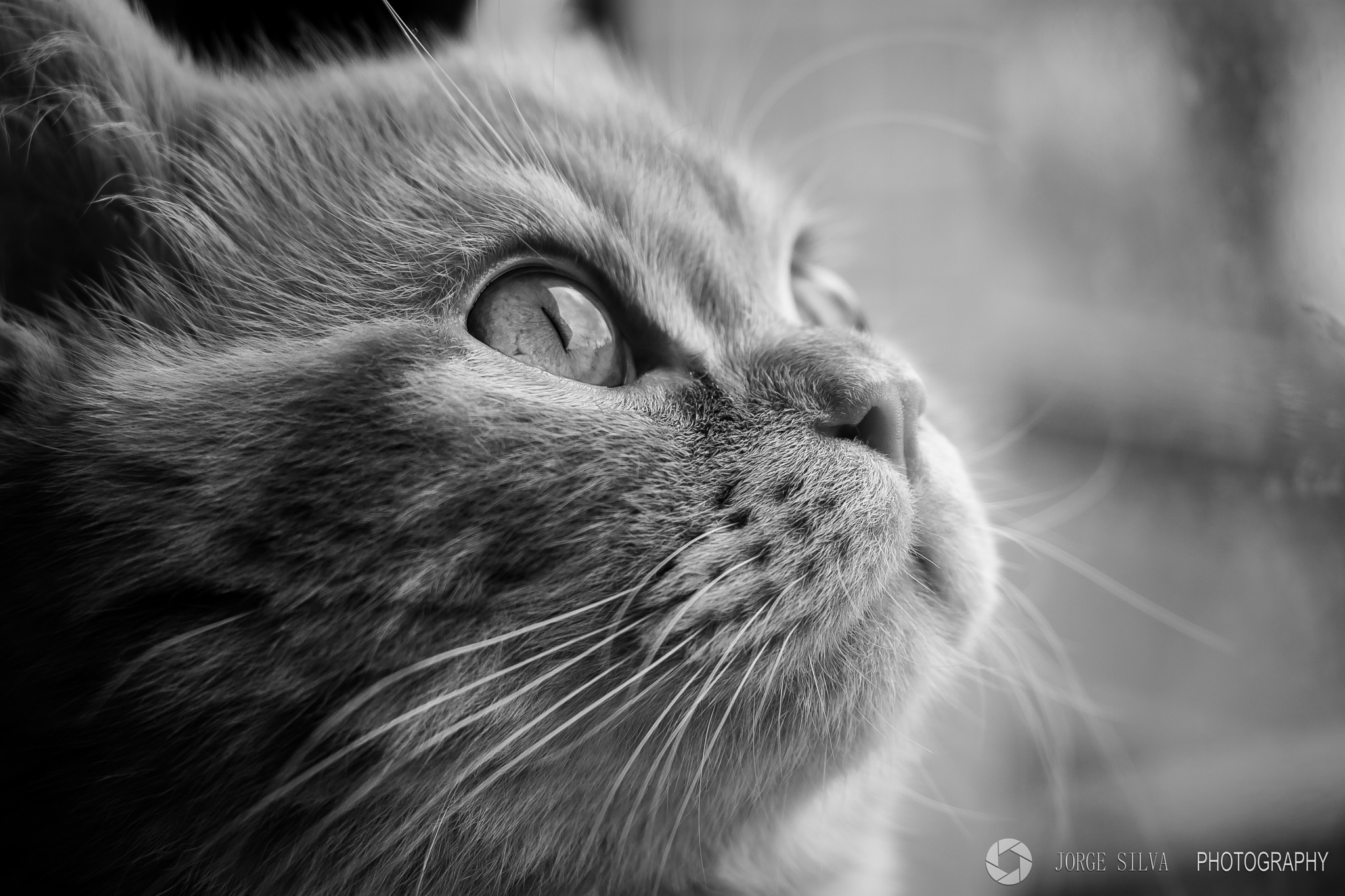 cat by JORGEpht