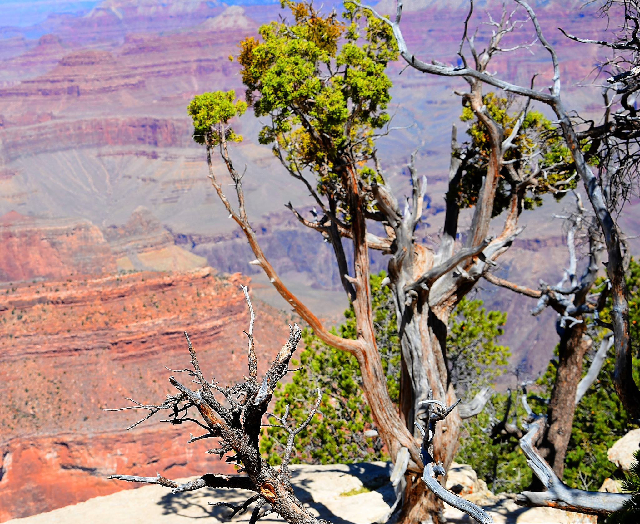 Grand Canyon by ghost