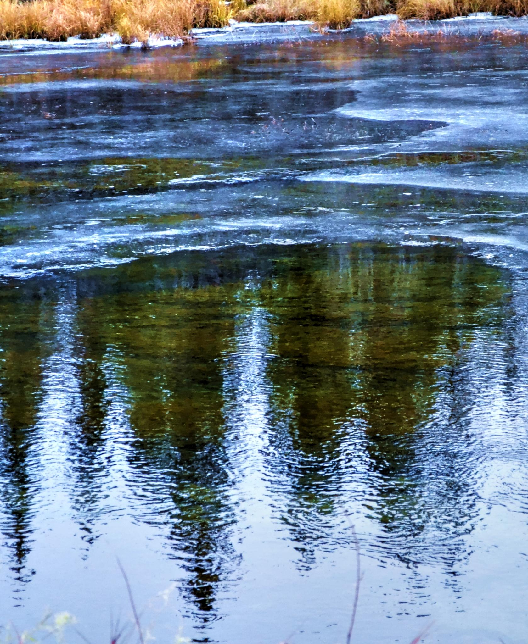 Icy Reflections of Spruce by ghost