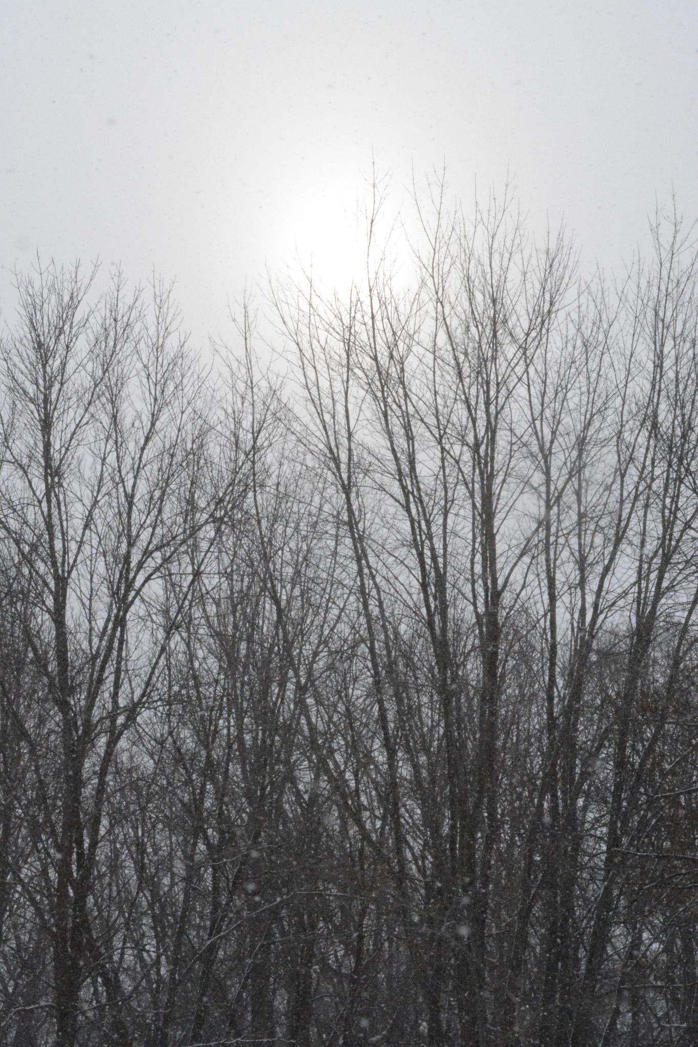 Winter morning by subbu123