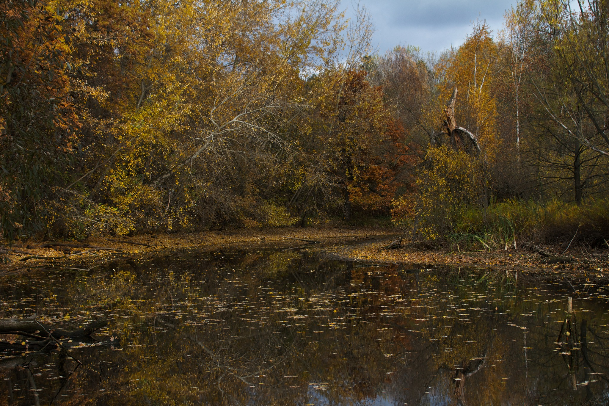Осень № 2 by alservik