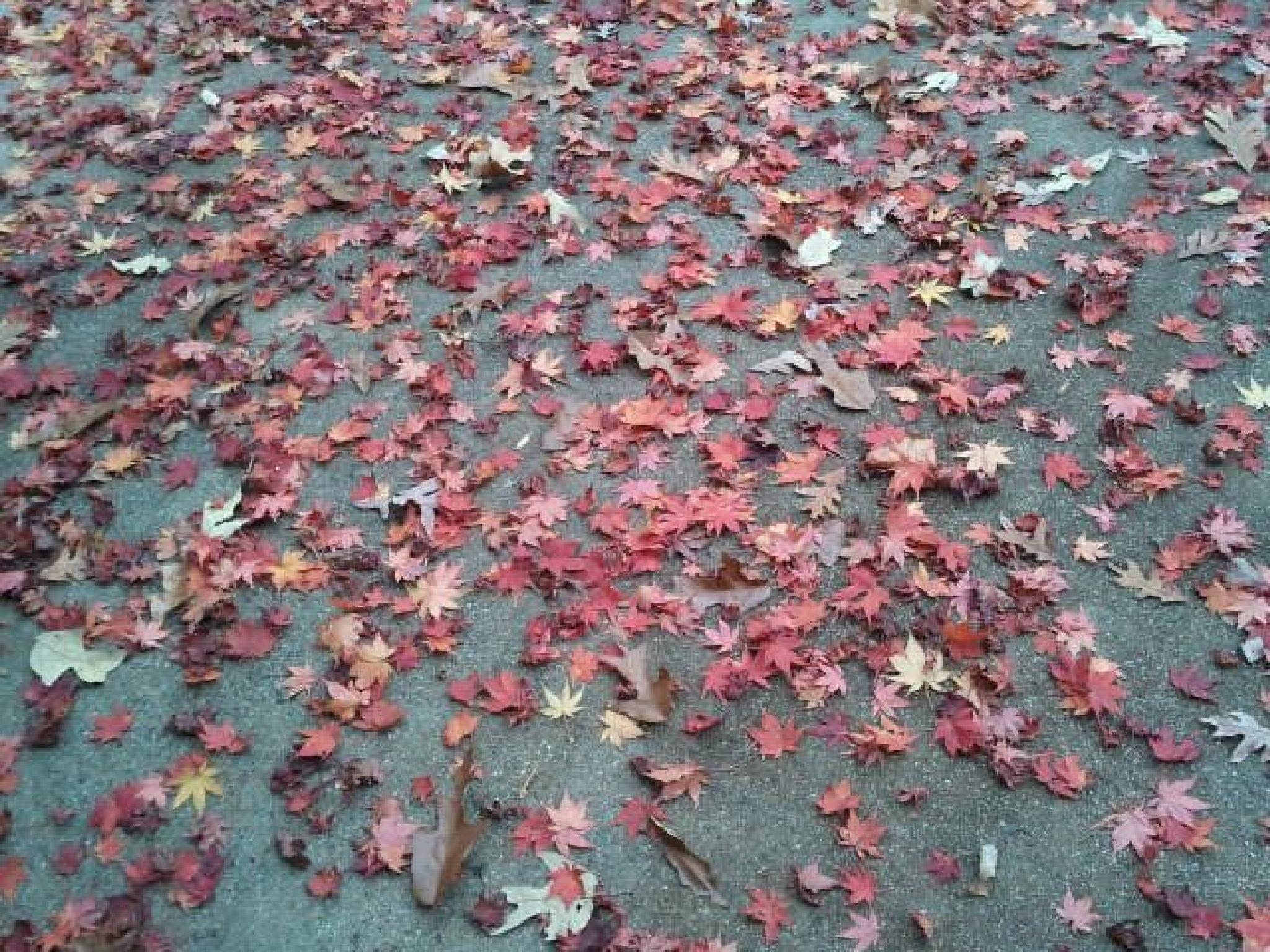 Beautiful Fiery Fall Leaves by Dolores