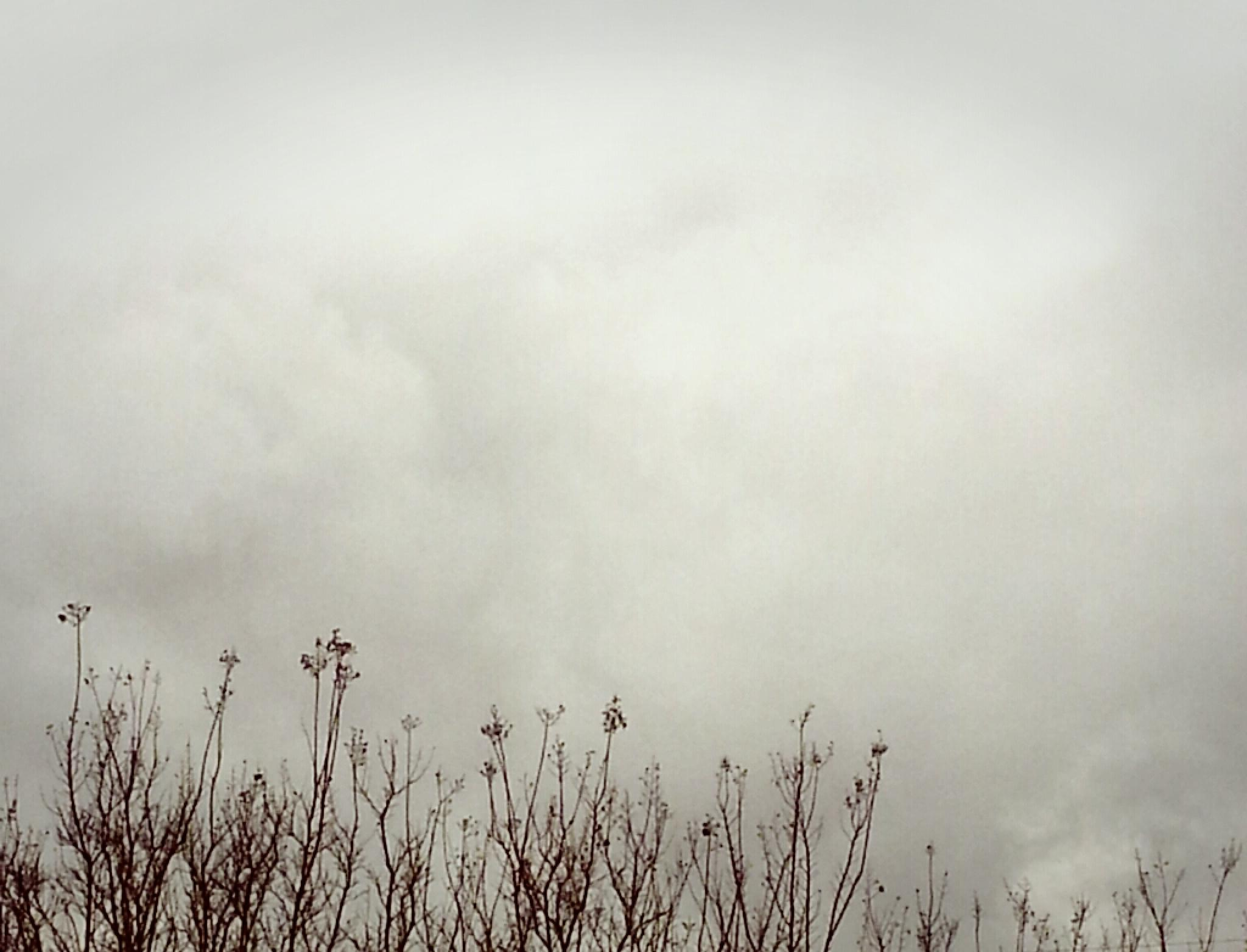 Overcast Winter's Day by Dolores