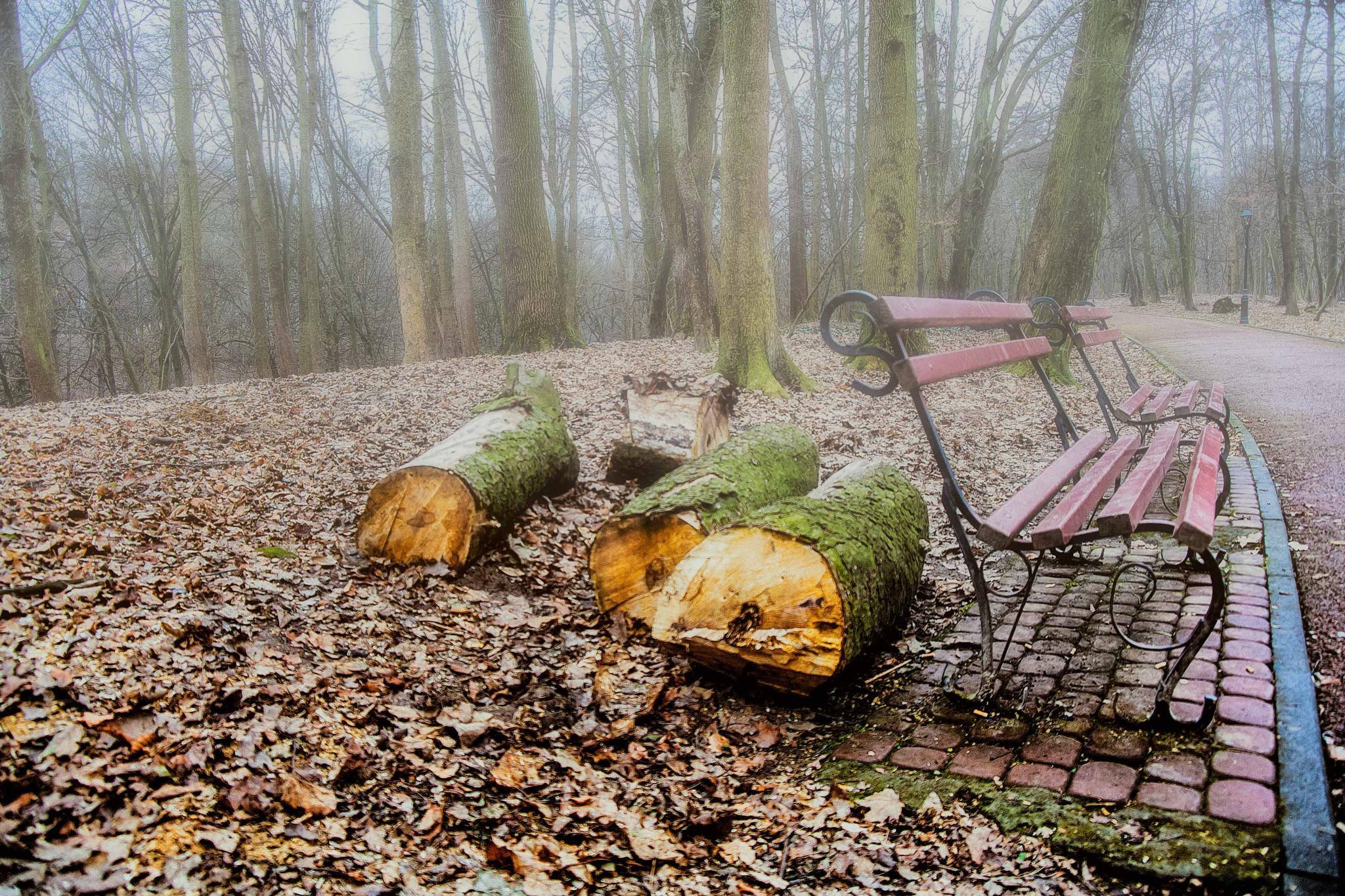 It Mists by Yevheniy  Mokin