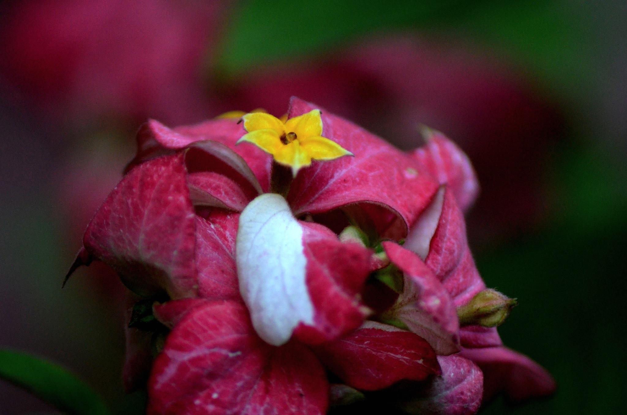 Blooming Beauty...! by Thomas Francis
