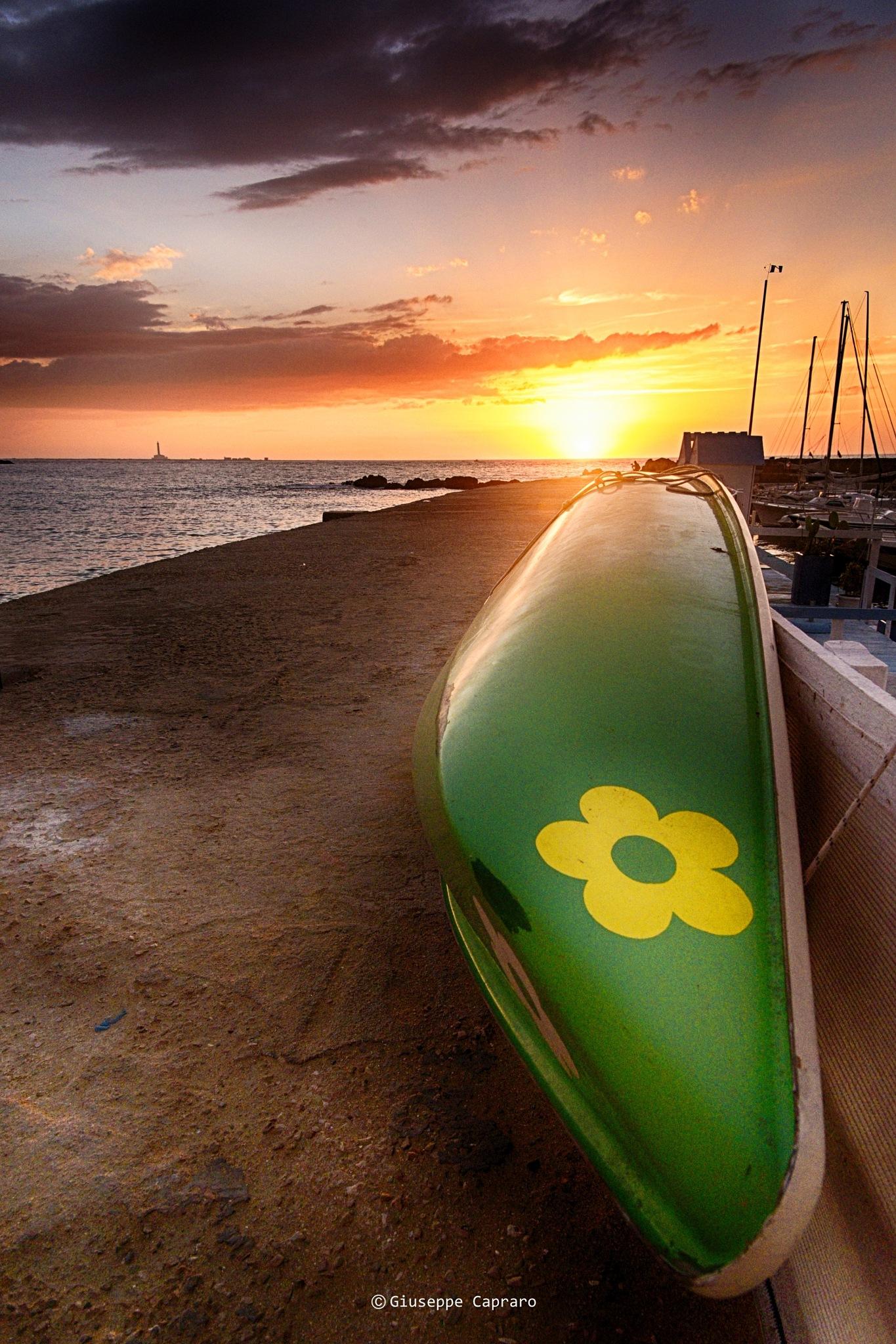 Daisy at sunset by Giuseppe Capraro