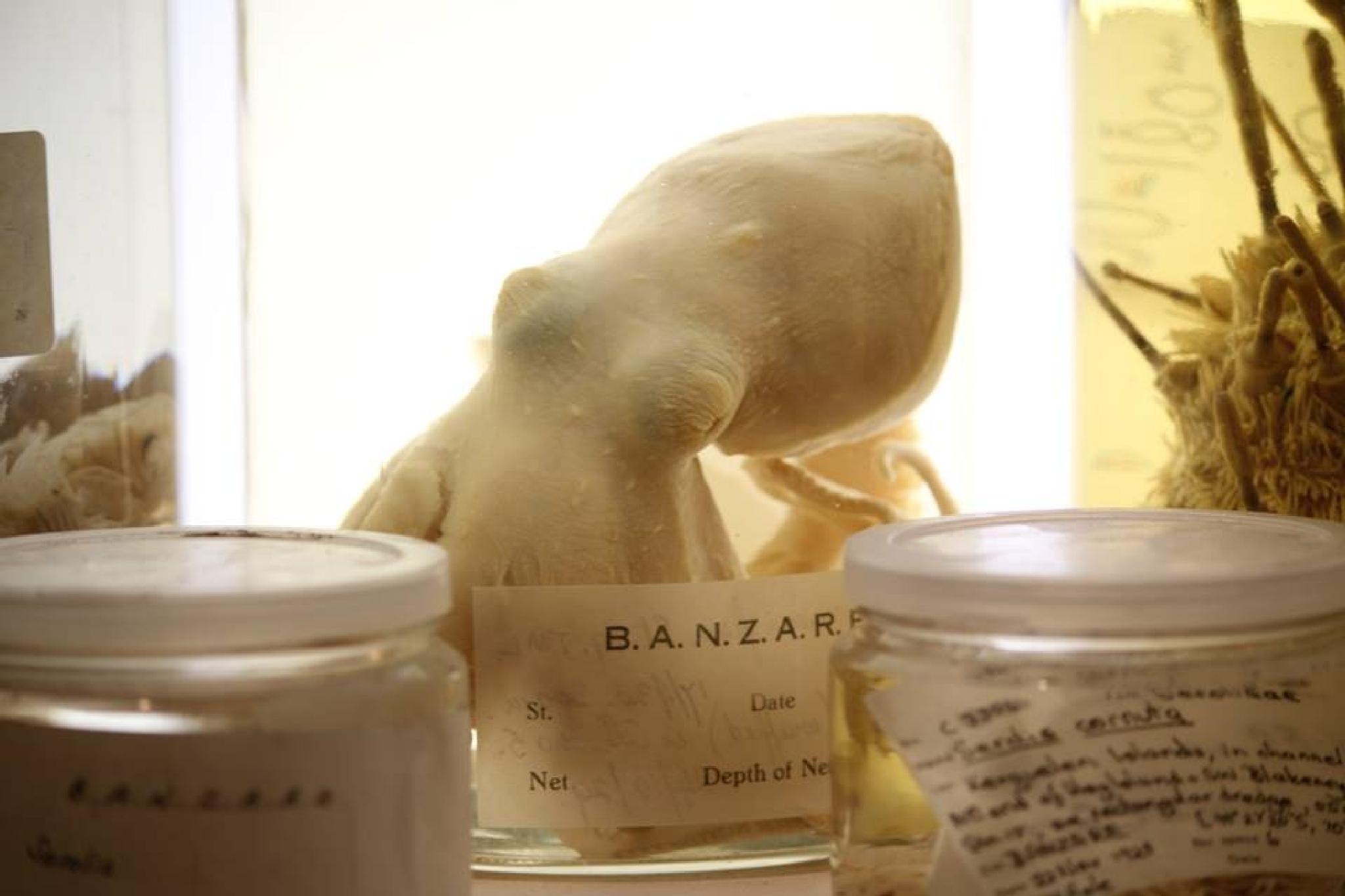 Preserved Specimens by mac