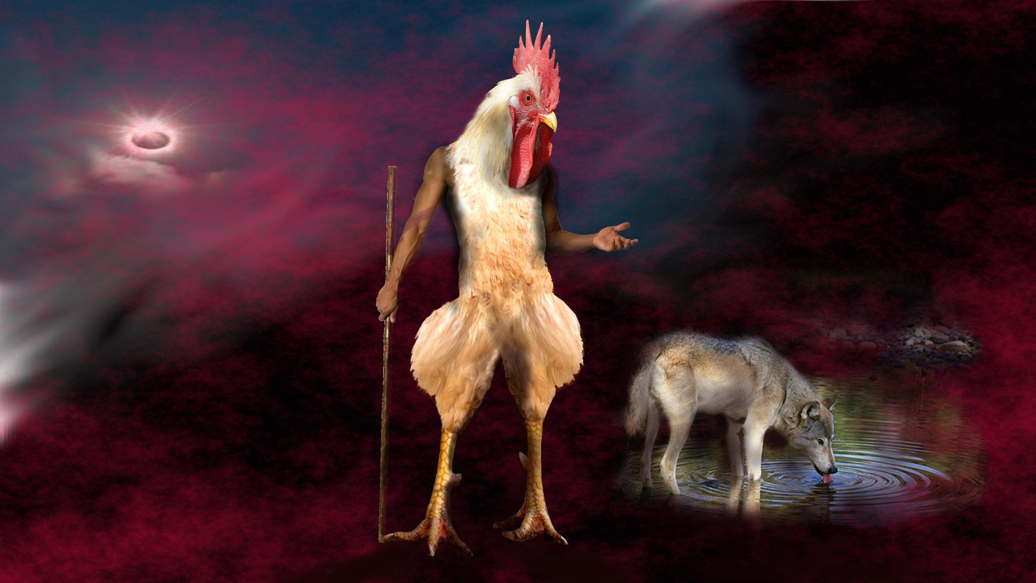 lupo o gallina - wolf or chicken by franco.zamarco