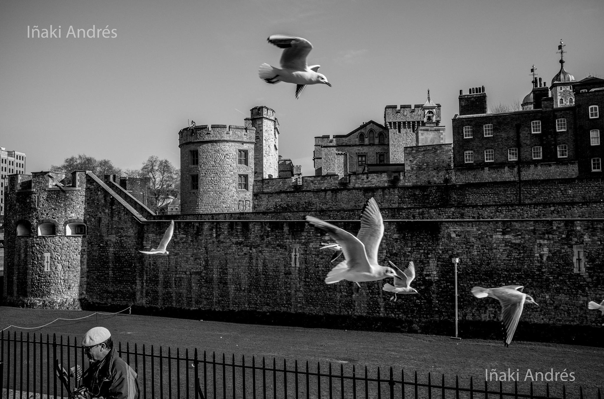 Pigeons by Iñaki Andrés.