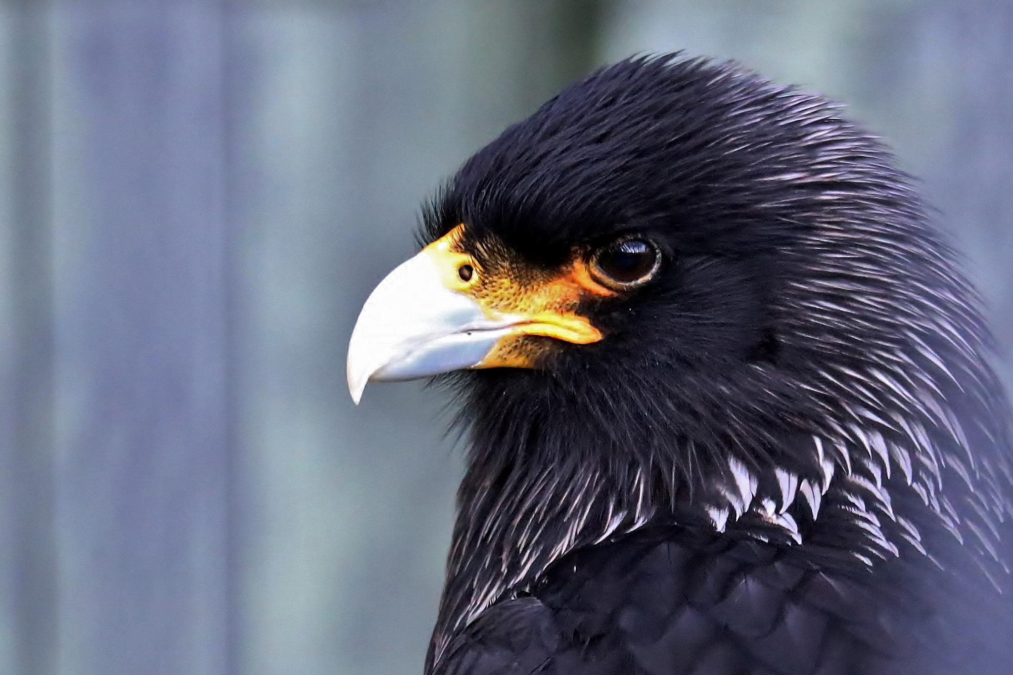 Bird by Yves de Boer