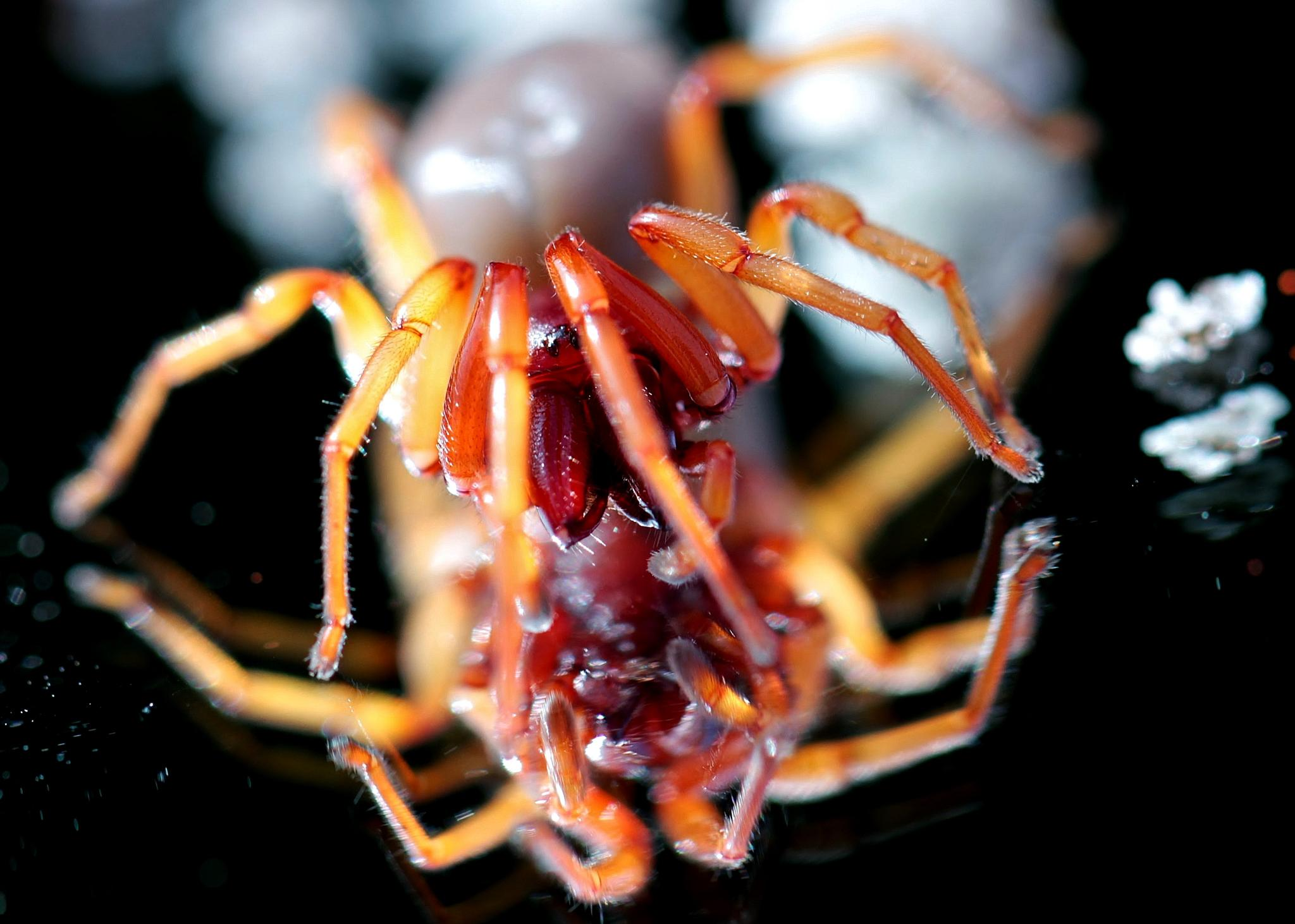 Table spider by Yves de Boer