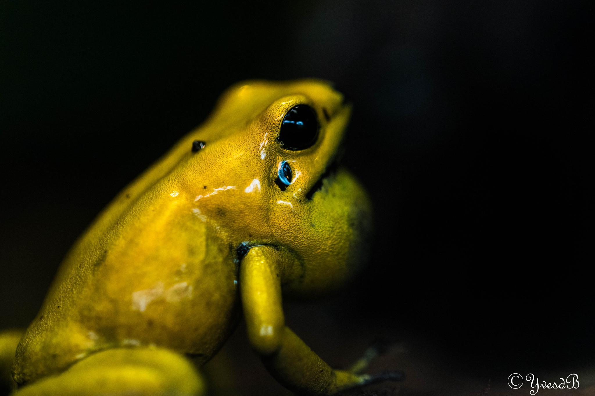 Froggy by Yves de Boer