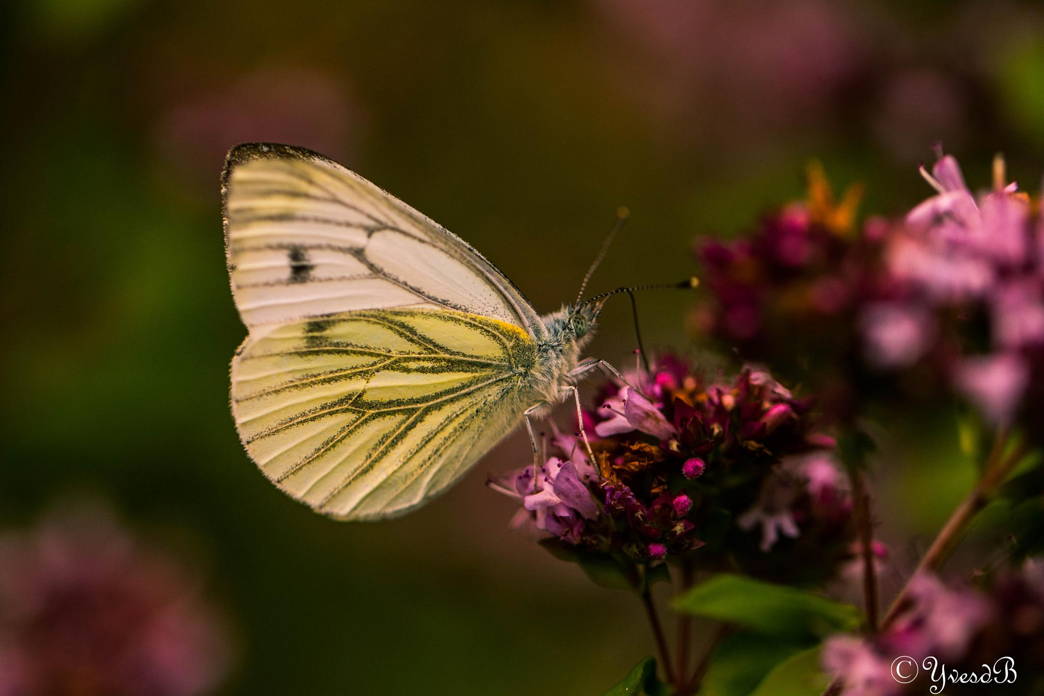 Photo in Macro #butterfly dark