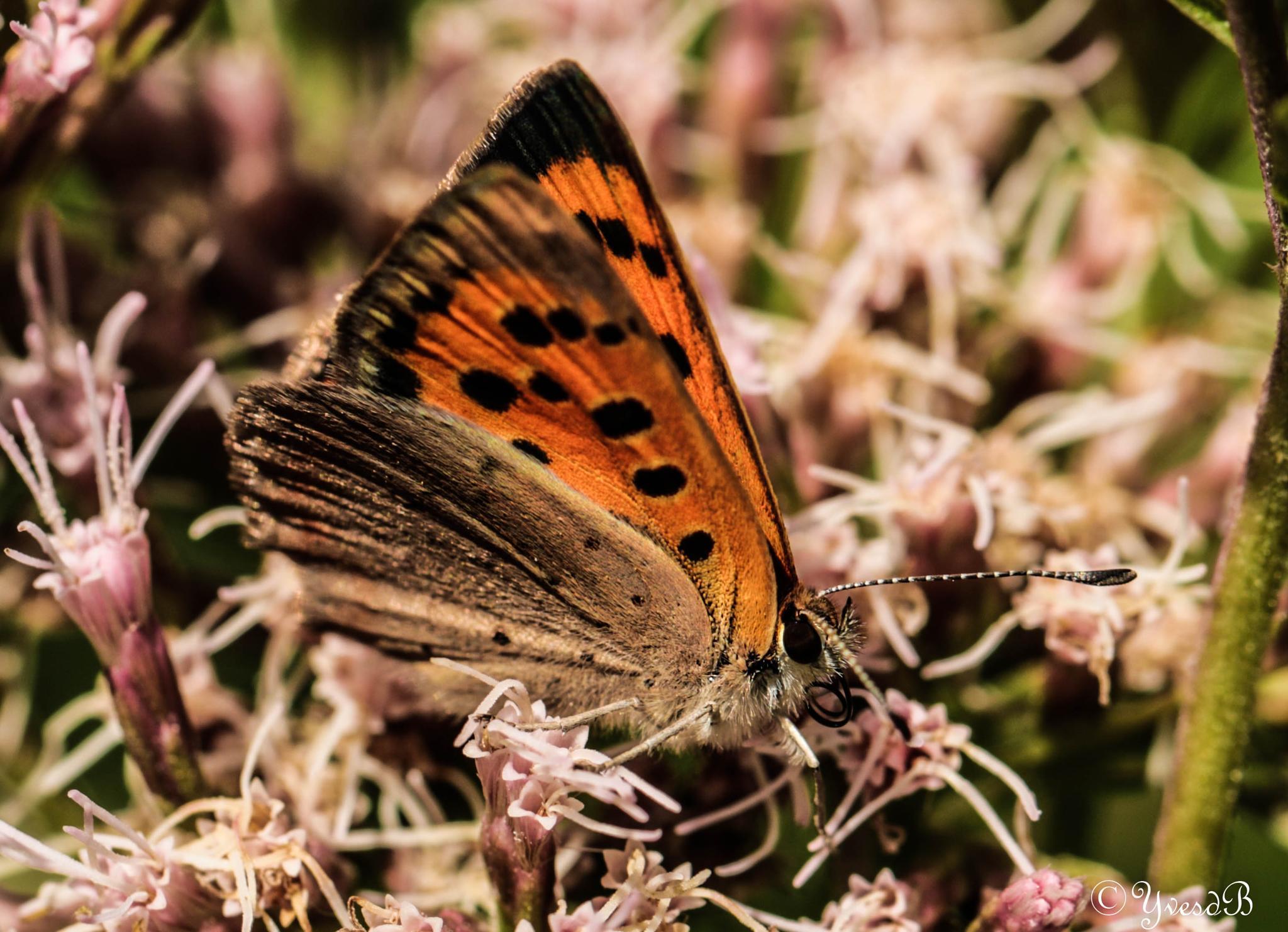 Butterfly by Yves de Boer