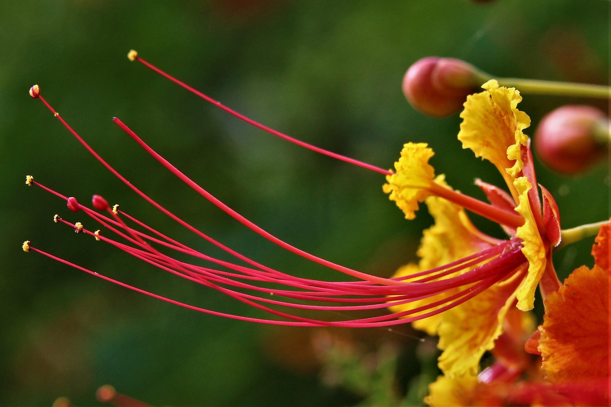 ~~~~~Yellow  flowers.....! by gajju.tyagi.1