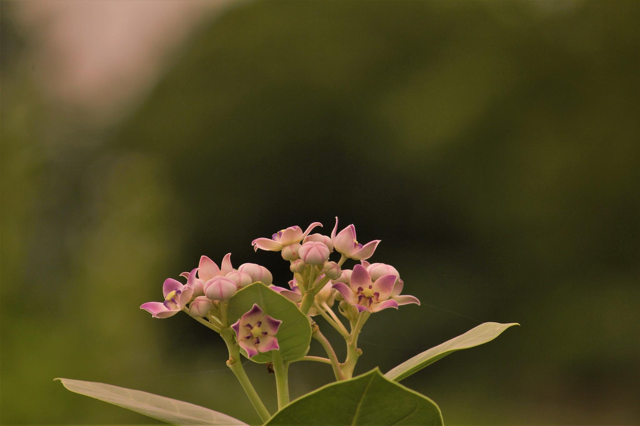 ~~~~~~Aankha Flowers,.........!! by gajju.tyagi.1