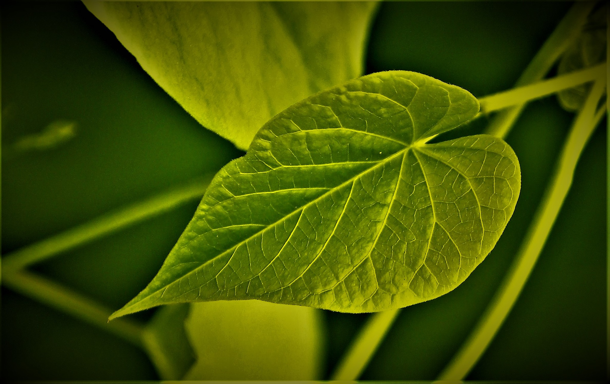~~~~~~Leafe of a Creaper from the Road-side,.........!!! by gajju.tyagi.1