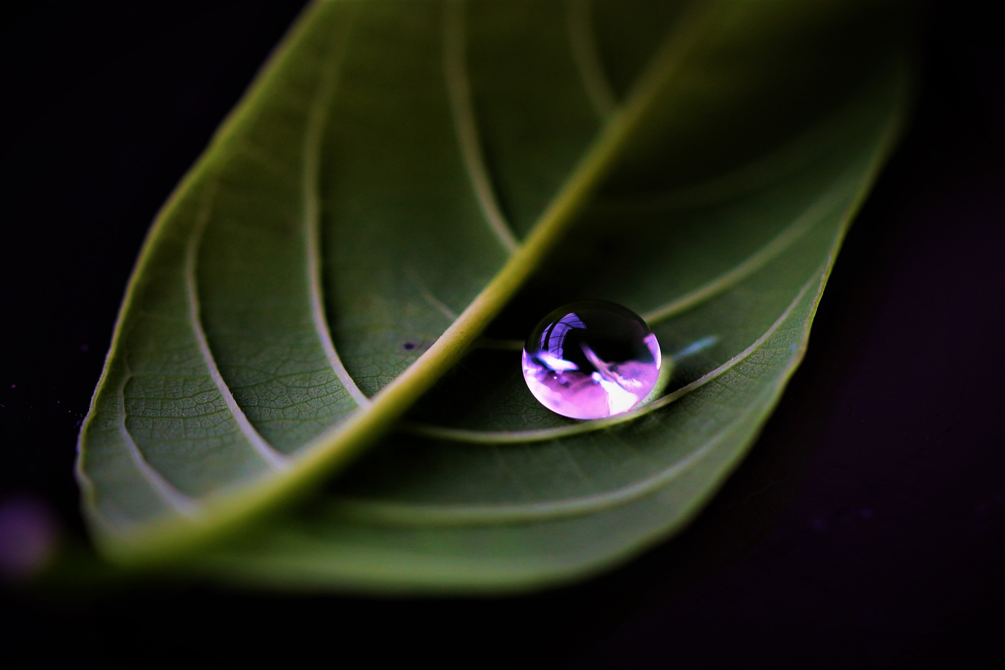 ~~~~~Leave holding a drop,........!! by gajju.tyagi.1