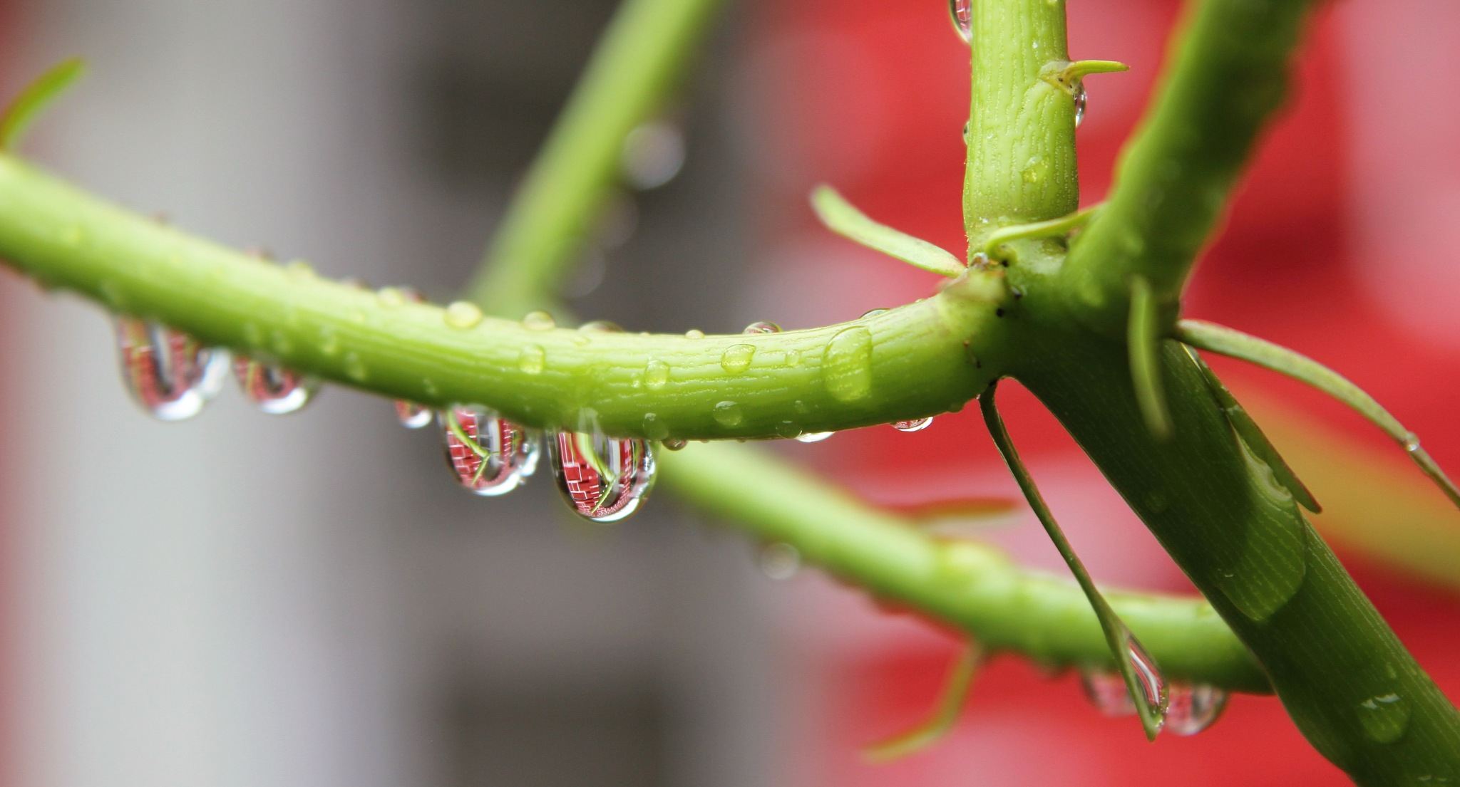 "~~~~~Rain Drops, Hanging with ""the Reflaction"",........! by gajju.tyagi.1"
