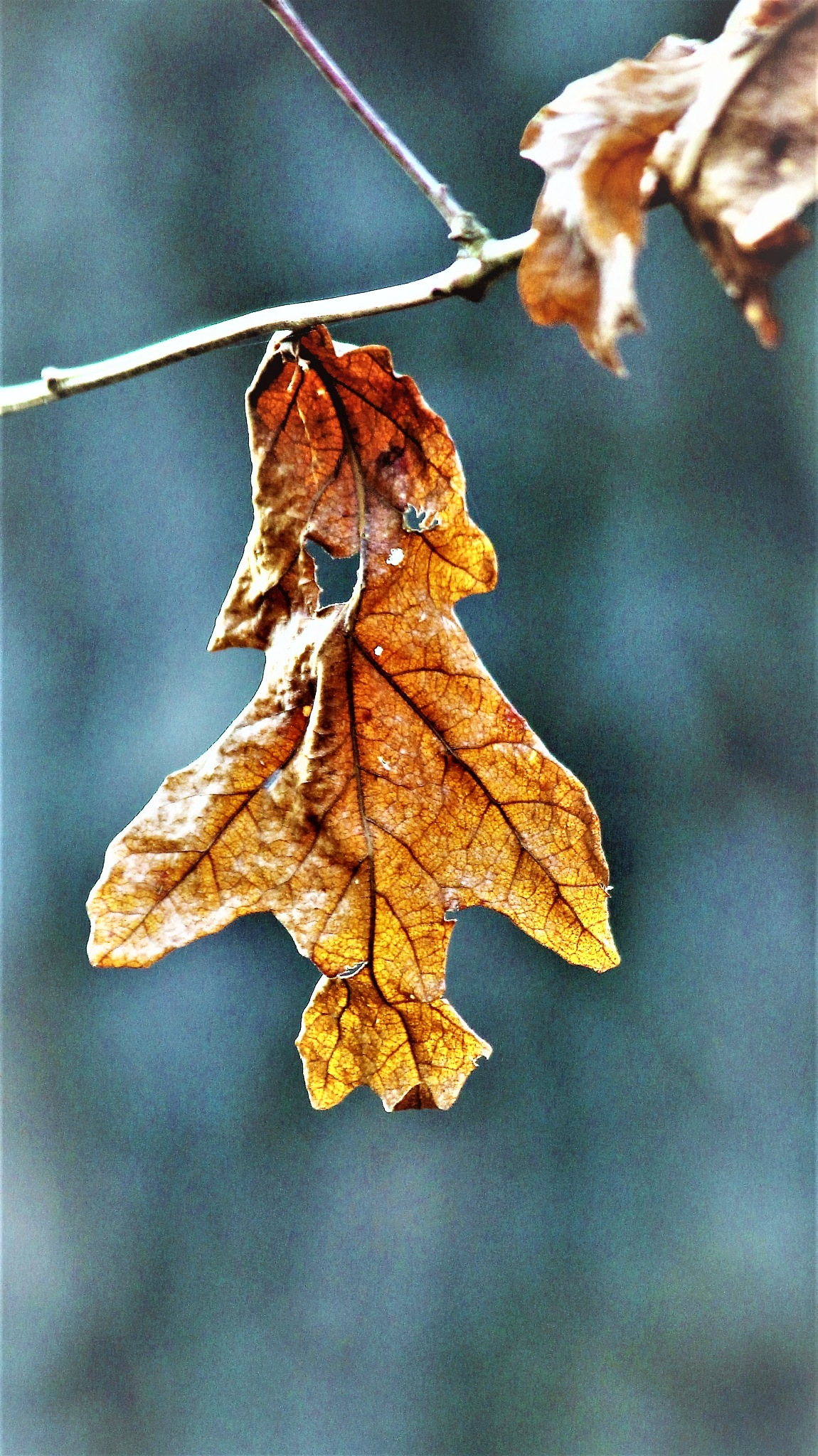 ~~~~~Hanging it's  turn to Fall,..........! by gajju.tyagi.1
