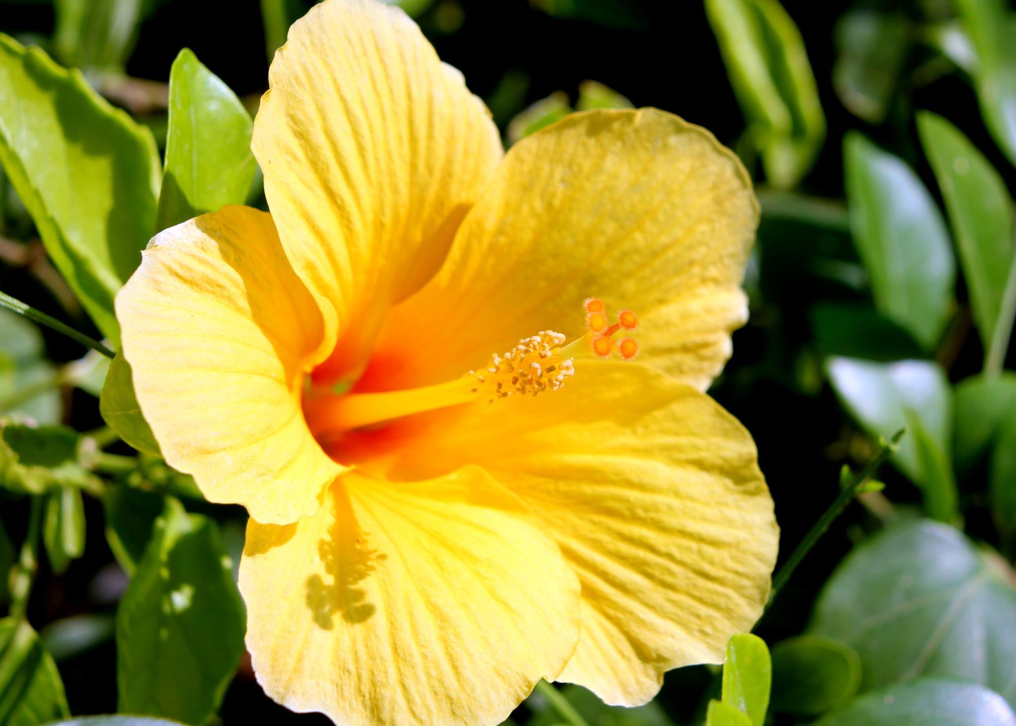 ~~~~~   Yellow  flower....2.! by gajju.tyagi.1