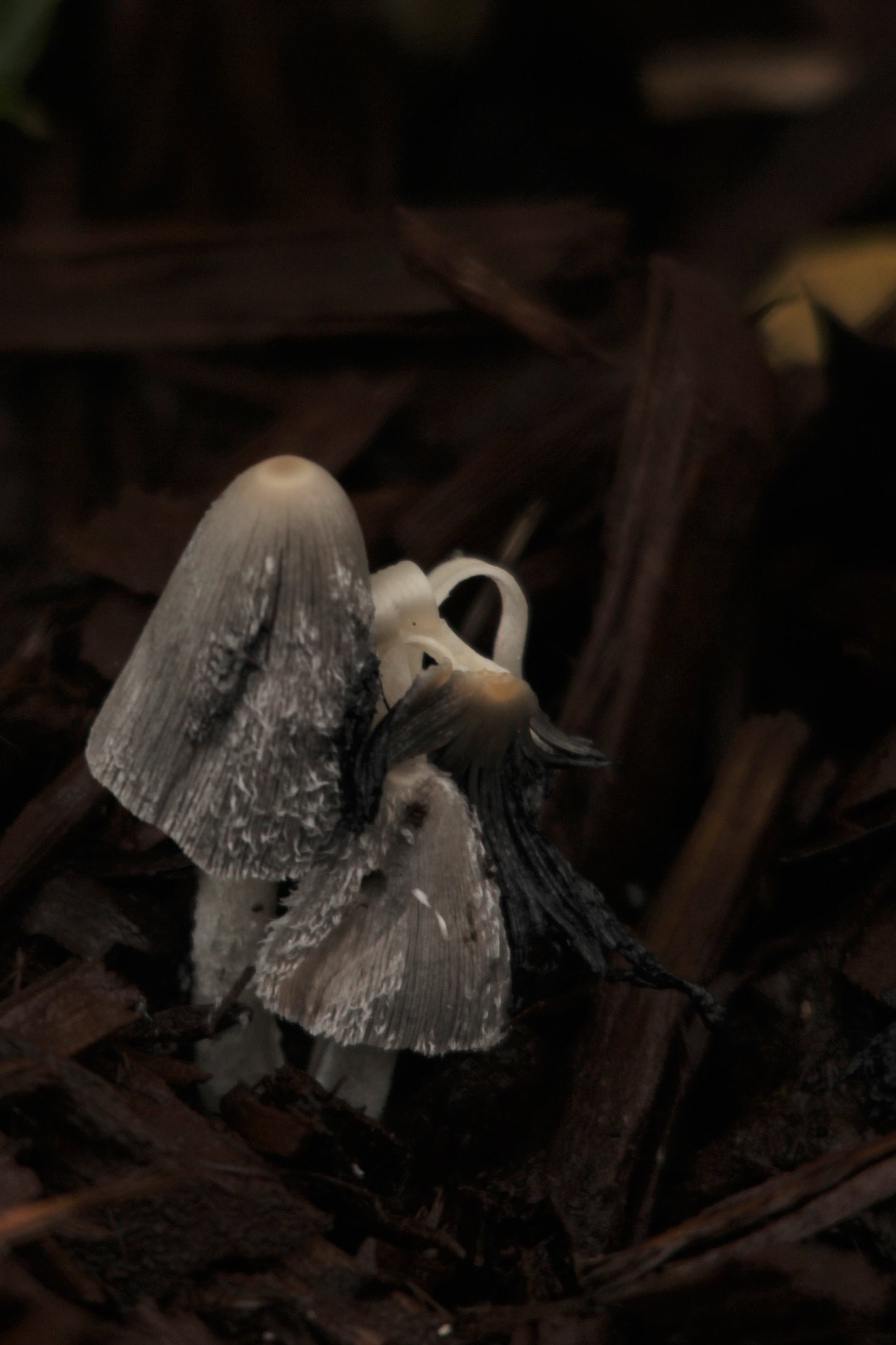 ~~~~~ Dark, in the  Dark.....1 by gajju.tyagi.1