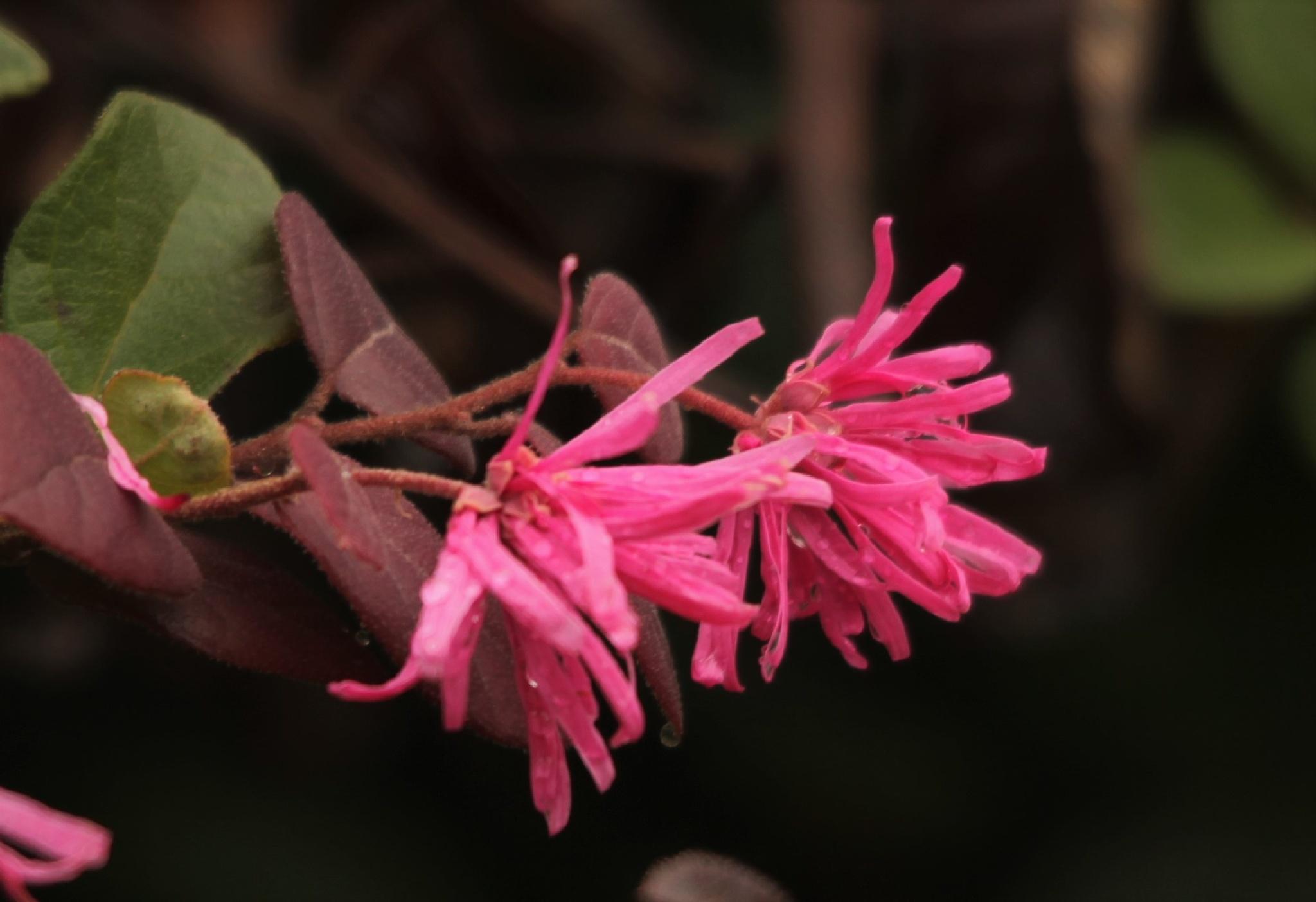 ~~~~` Flowers.....! by gajju.tyagi.1