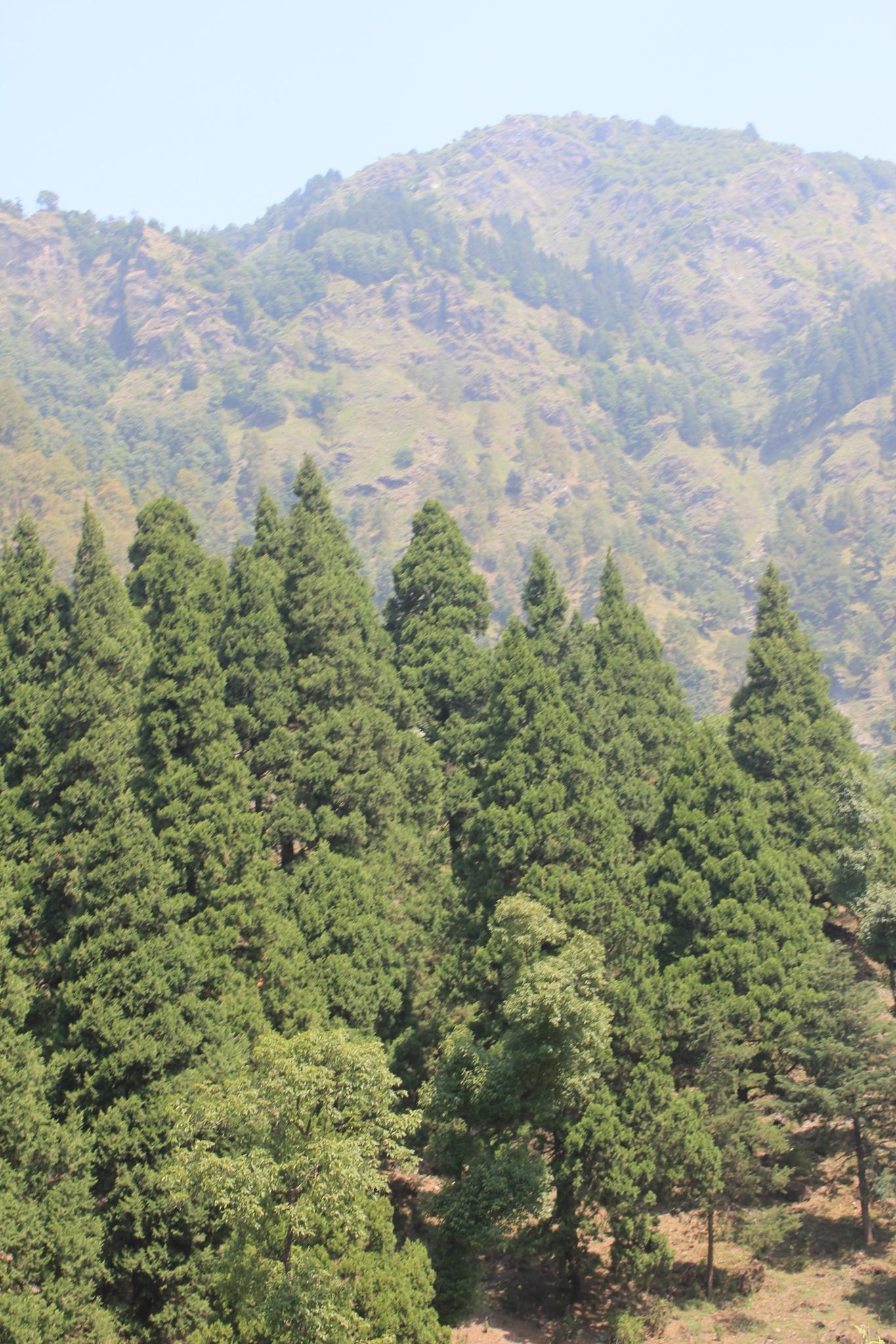 ~~~~` footHills of Himalya...4.! by gajju.tyagi.1